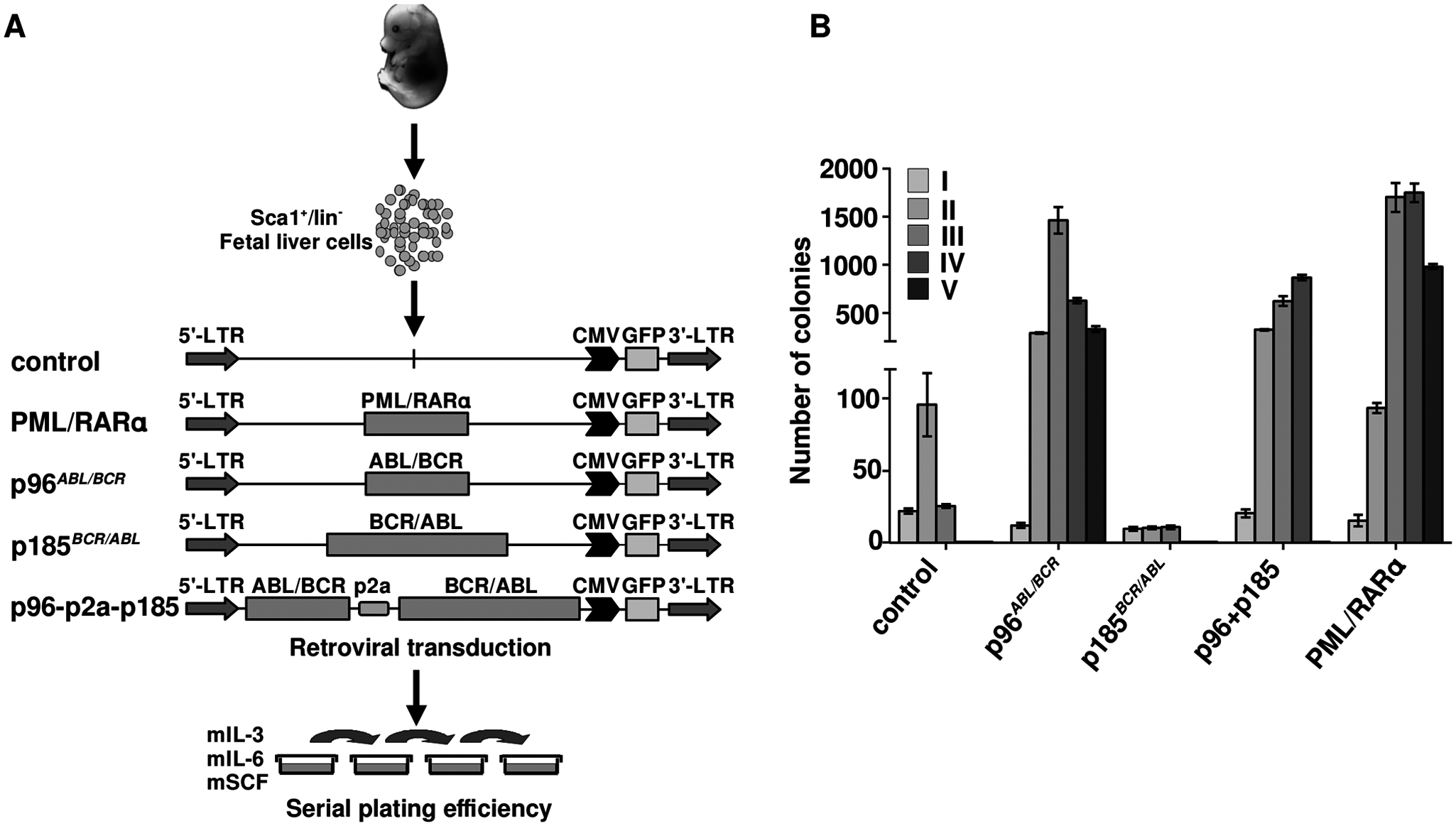 Effect of the t(9;22) fusion proteins the serial replating potential of murine fetal liver HSCs.