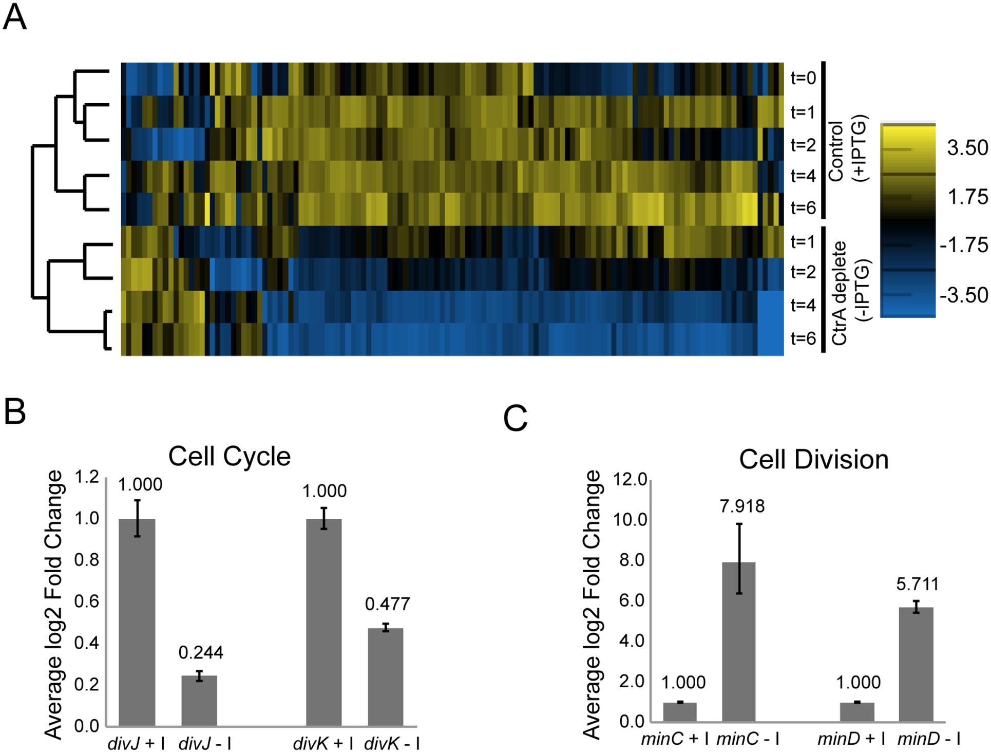 CtrA regulates the expression of at least 126 <i>S</i>. <i>meliloti</i> genes.