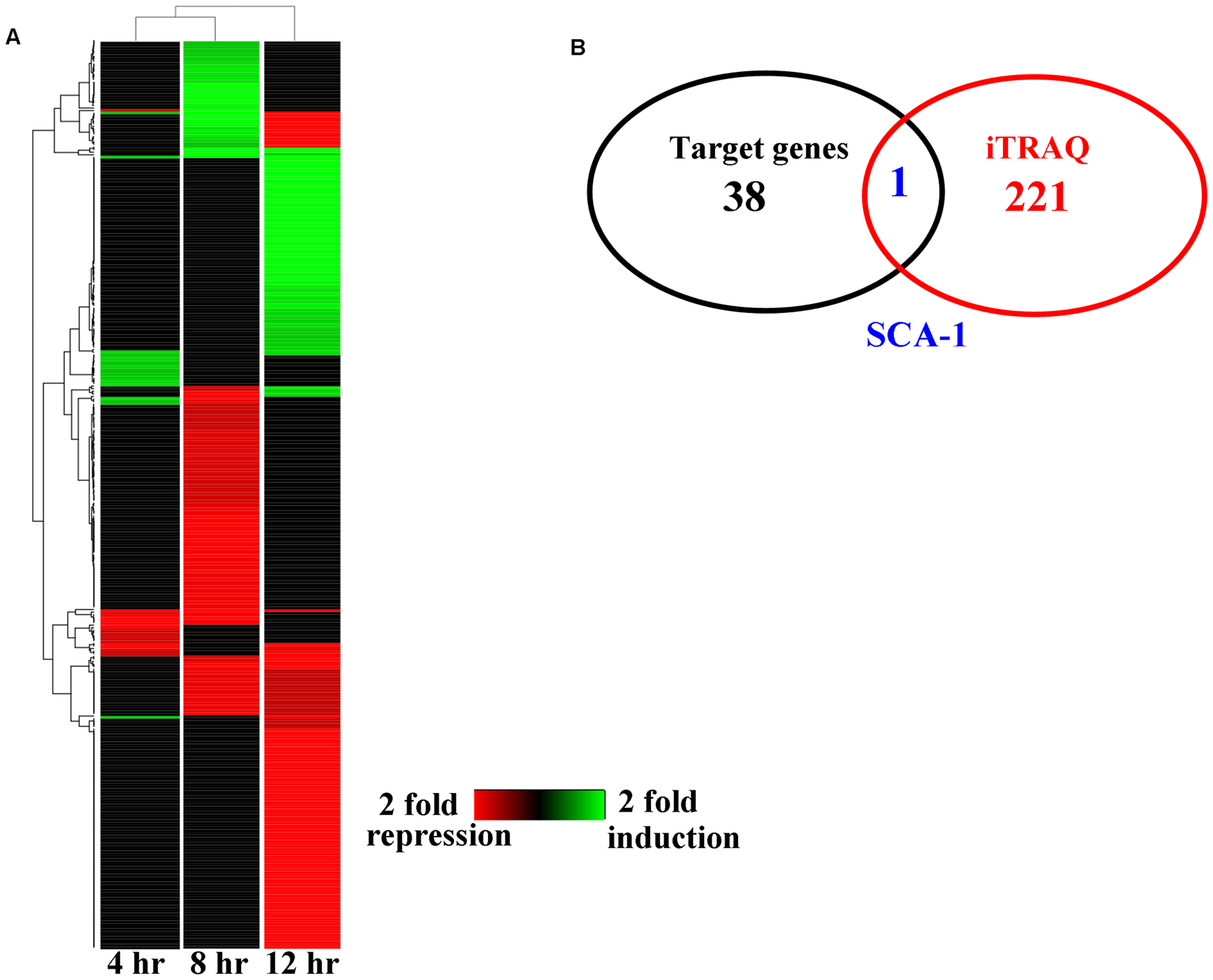 The changes of protein levels in worms after <i>P. aeruginosa</i> infection.