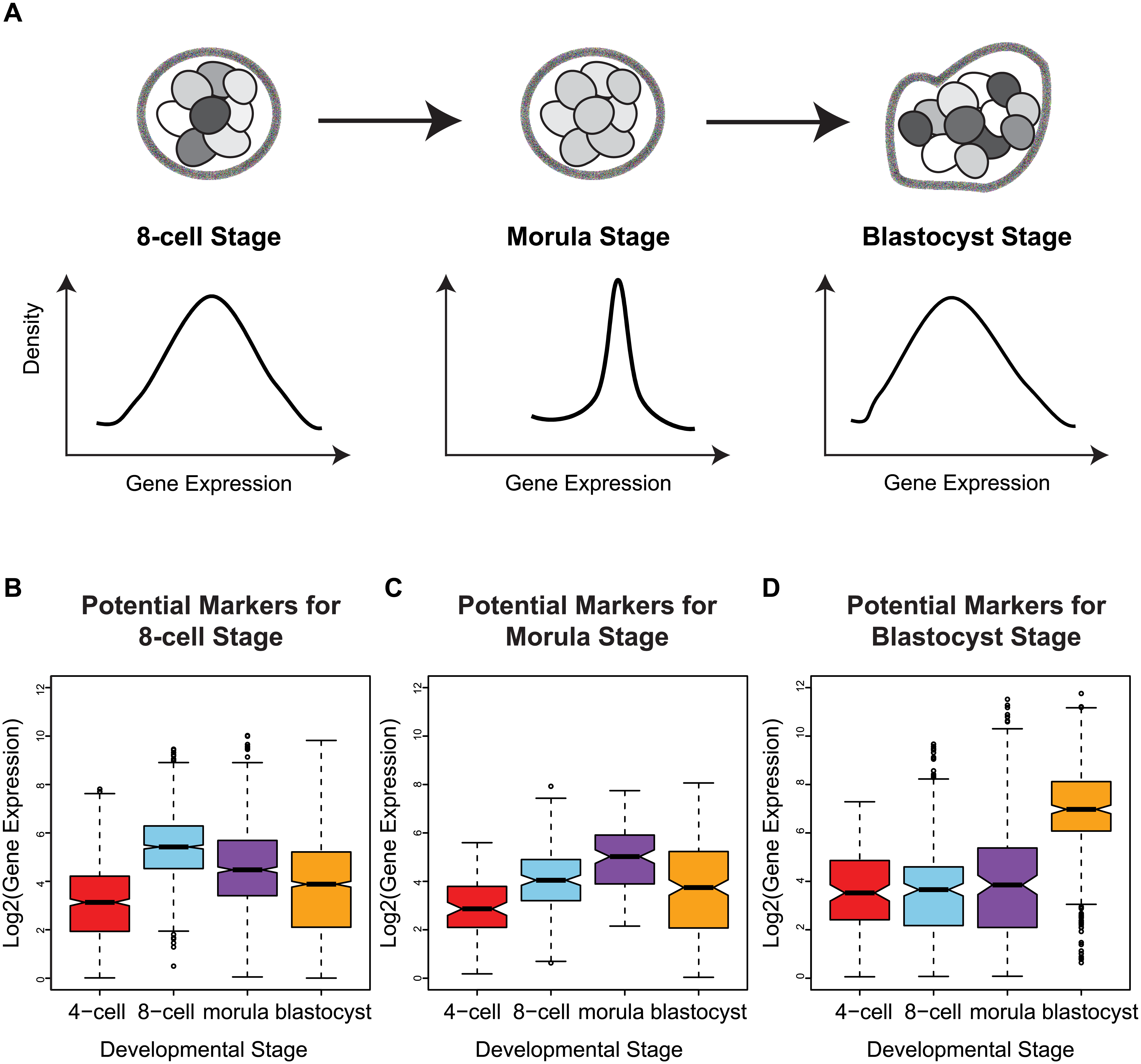 Stage-specific variability markers are based on changes in inter-cellular variability.