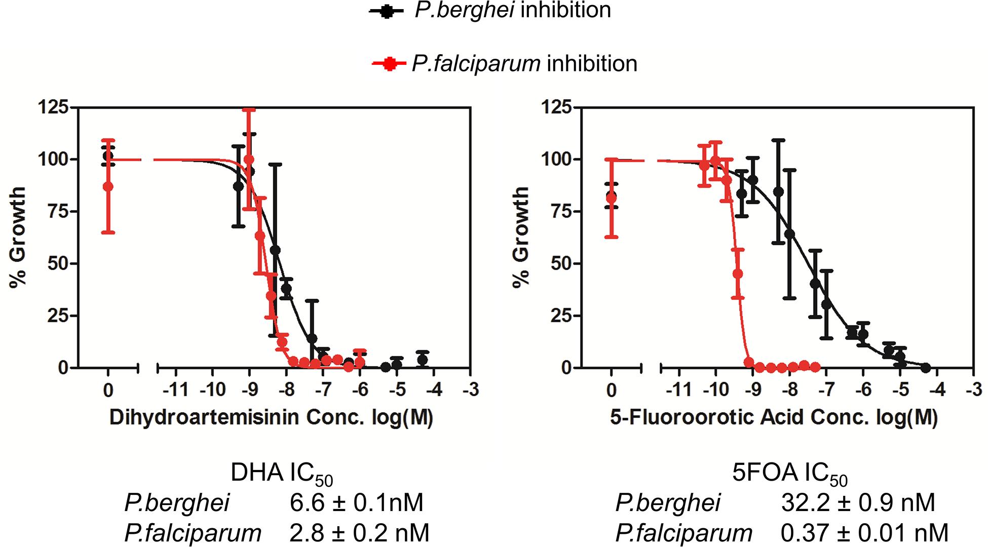 <i>P</i>. <i>berghei</i> and <i>P</i>. <i>falciparum</i> inhibition by dihydroartemisinin (DHA) and 5-fluoroorotic acid (5FOA) <i>in vitro</i>.