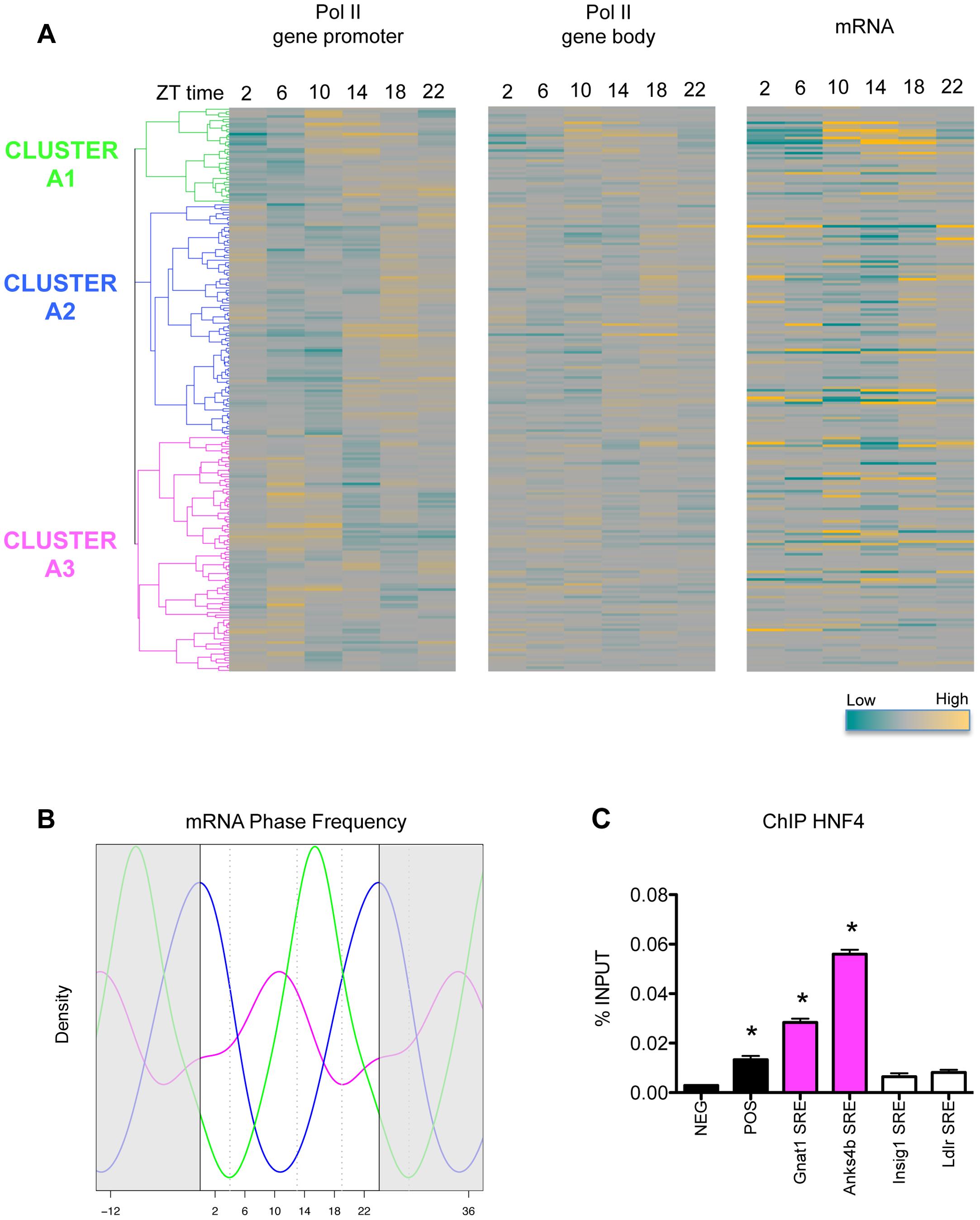 Pol II recruitment on SREBP1 target genes is not always synchronized with SREBP1 binding.