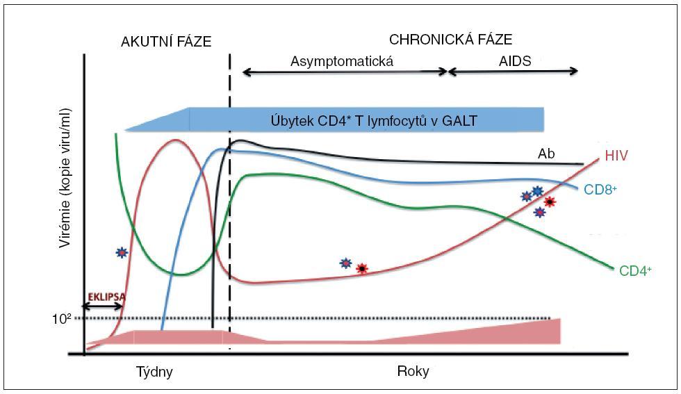 """Obr. 1. Průběh imunologických a virologických parametrů u HIV infekce Po infekci dochází v akutní fázi k lokální replikaci viru a charakteristická je jeho malá antigenní variabilita. Ve fázi eklipsy je virus nedetekovatelný současně užívanými metodami. Posléze dochází k masivní replikaci viru a dosažení """"peak"""" virémie. V této fázi je vysoké riziko transmise a nastává deplece CD4+ T lymfocytů v lymfatických orgánech, zejména v GALT a současně s tím nastává pokles CD4+ T lymfocytů (CD4+) I v periferní krvi. Počátek imunitní odpovědi je charakterizován vzestupem CD8+ CTL (CD8+) a následně I protilátek (Ab), jenž má za následek snížení virové replikace a pokles hladiny viru. V chronické fázi je ustaven virový set point a dojde ke obnovení hladiny CD4+ T lymfocytů v periferní krvi, ne však v GALT. Při progresi onemocnění dochází k soustavnému poklesu CD4 T lymfocytů a jejich funkce a vzestupu replikace viru, který se také diverzifikuje. Objevují se oportunní infekce, které charakterizují AIDS. Nakonec dojde k rozvratu imunity."""
