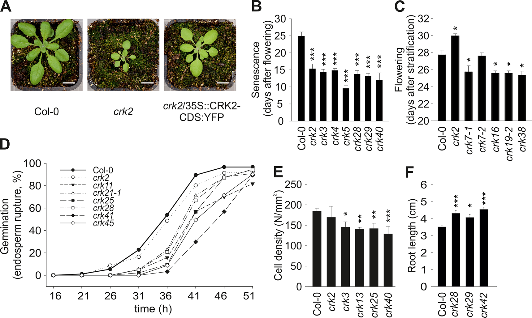Plant development is affected in several <i>crk</i> mutants.