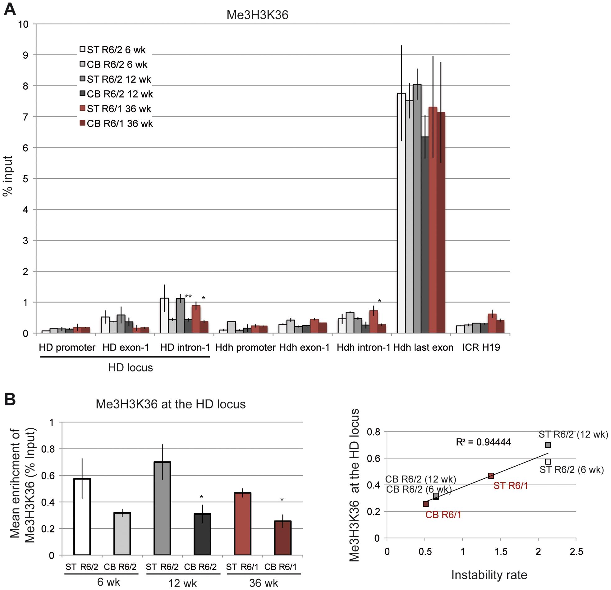 Me3H3K36 at the HD locus in R6/1 and R6/2 striatum and cerebellum.