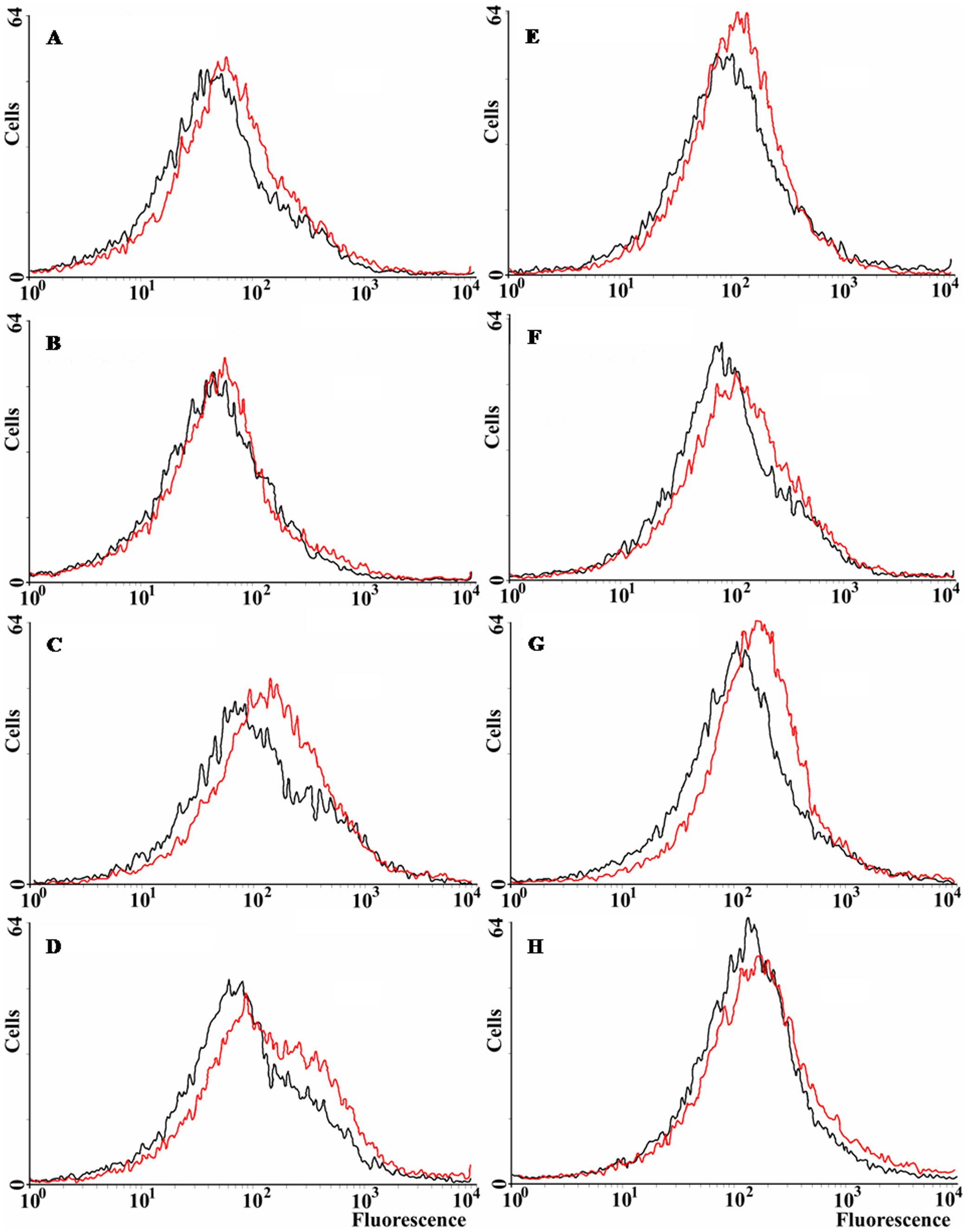 ROS levels in <i>E. coli</i> wild-type and <i>norM</i>, <i>mutT</i> and <i>sodB</i> derivatives.