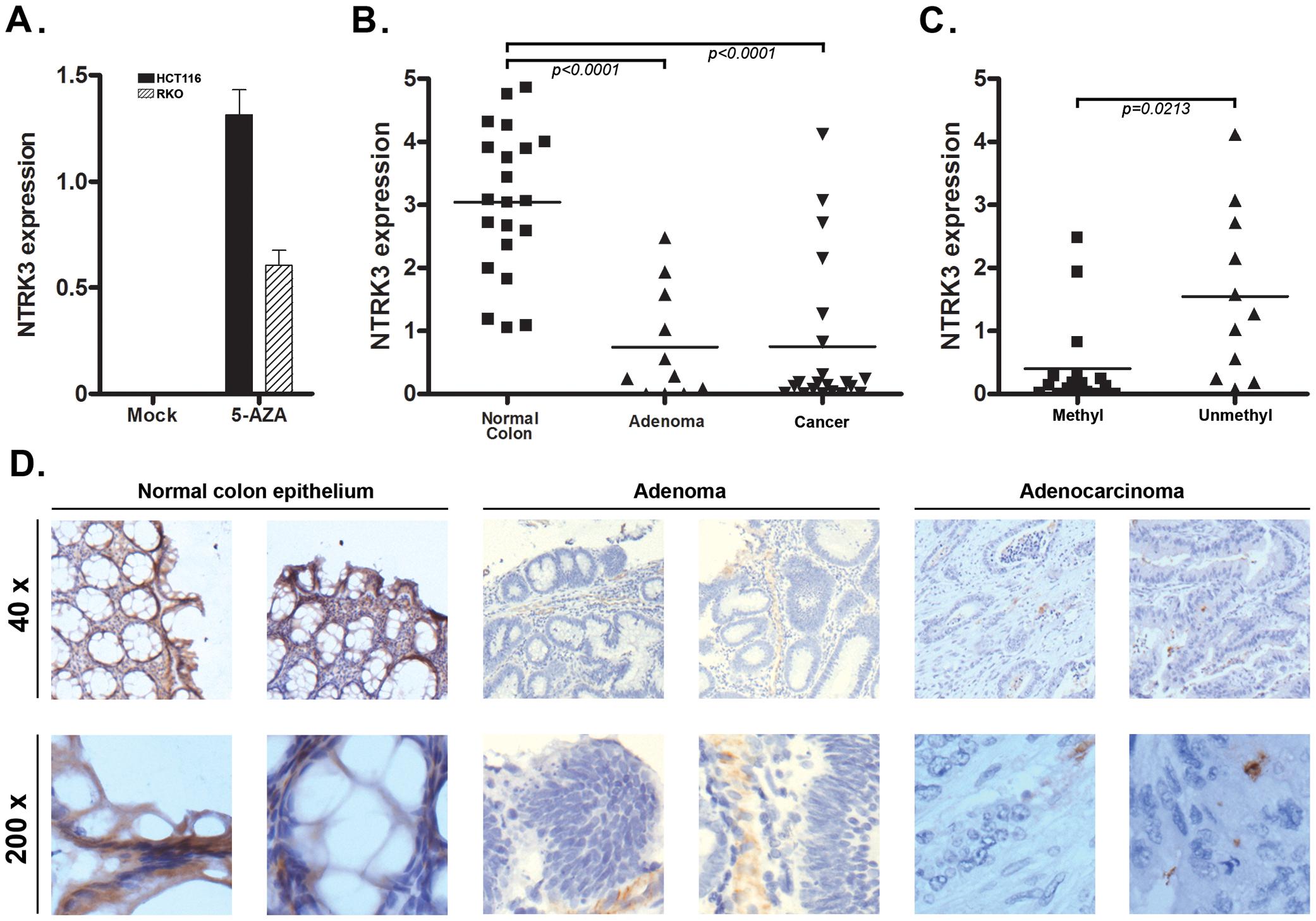 <i>NTRK3</i> methylation correlates with reduced <i>NTRK3</i> mRNA expression.