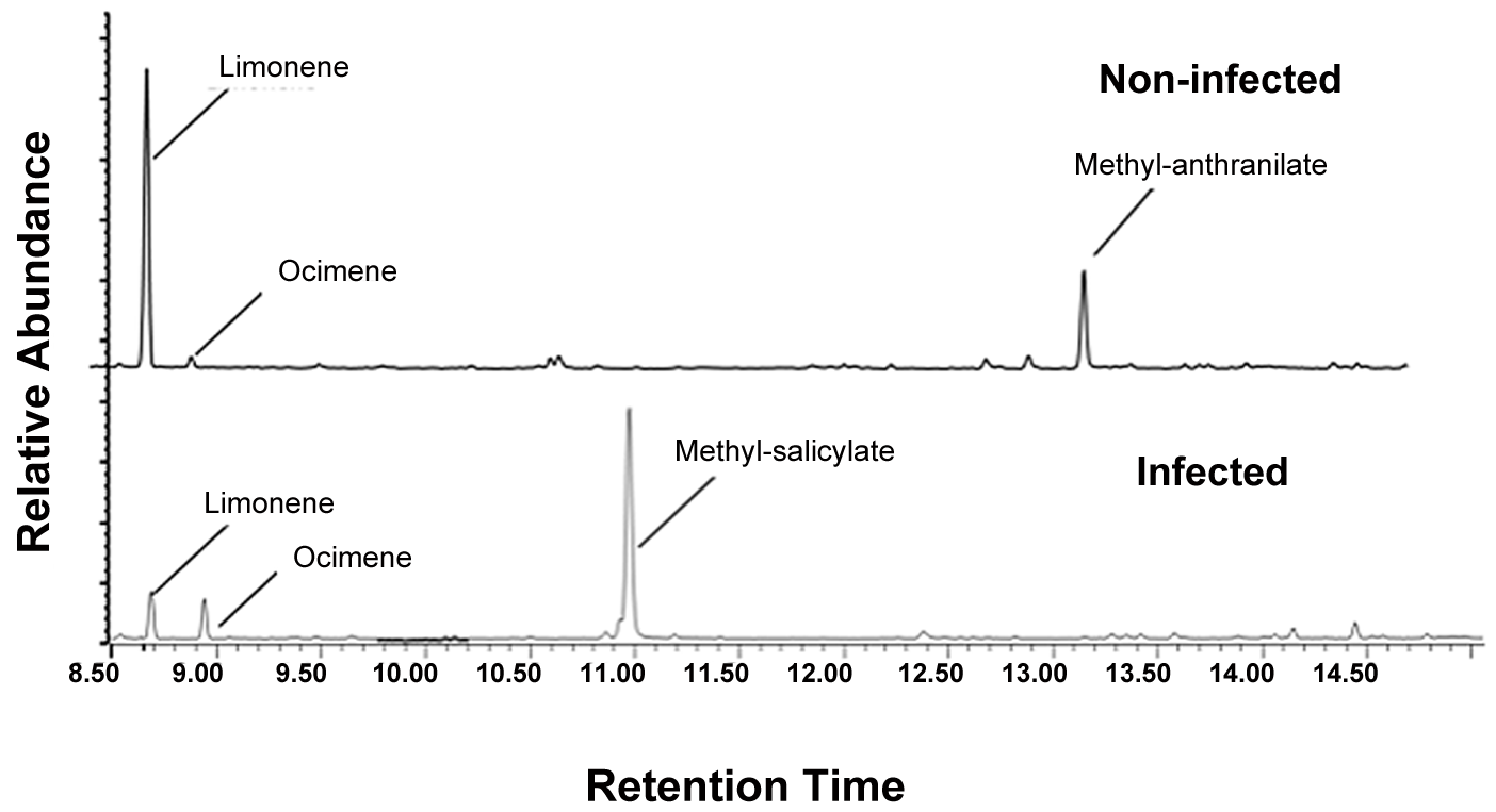 Chromatograms displaying volatile differences between Las-infected and non-infected plants.
