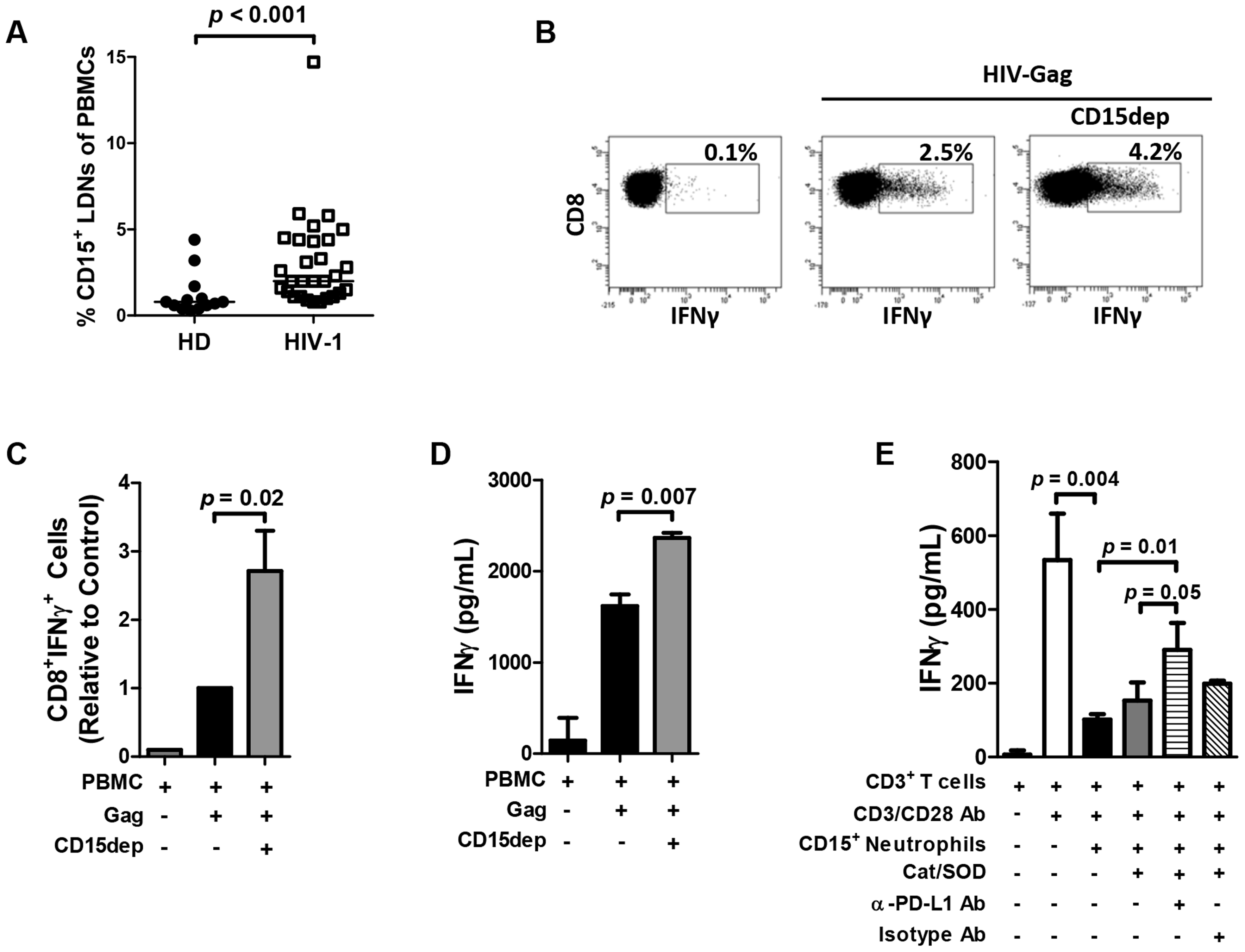 Neutrophil suppression of T cell function is mediated in part via the PD-L1/PD-1 pathway.