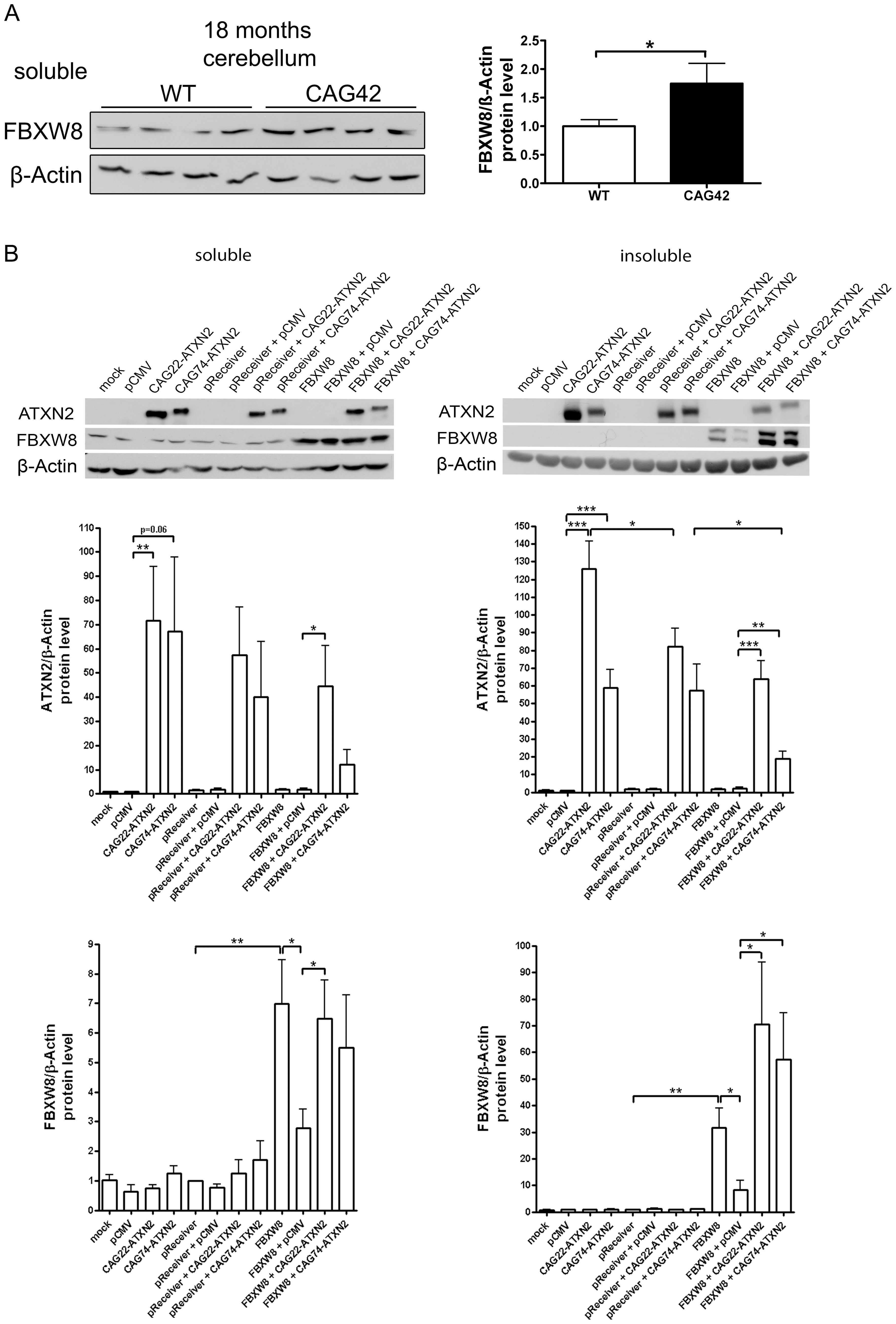 Elevated FBXW8 diminishes specifically insoluble expanded ATXN2.