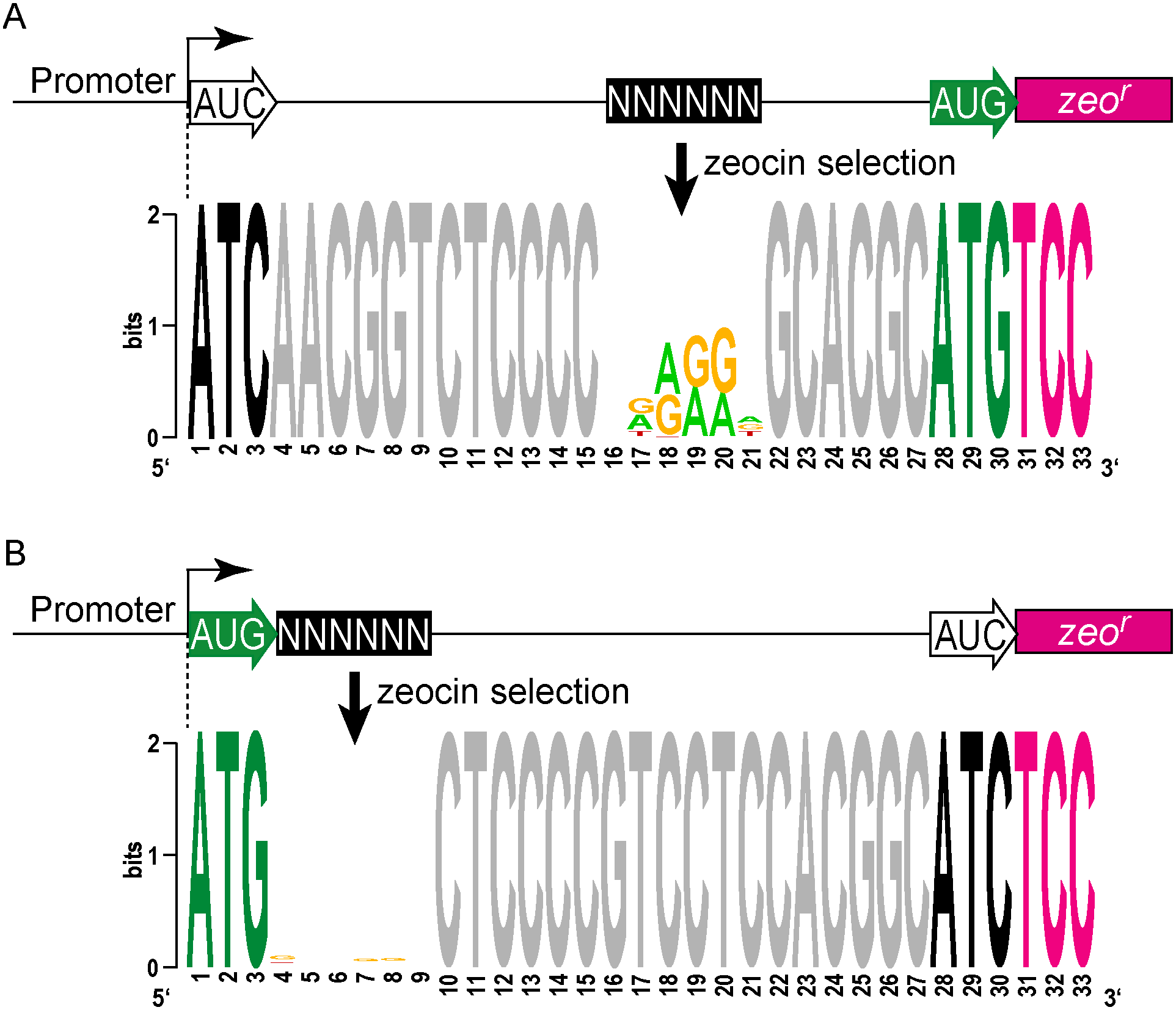 Definition of <i>cis</i> elements that support translation initiation in mycobacteria.