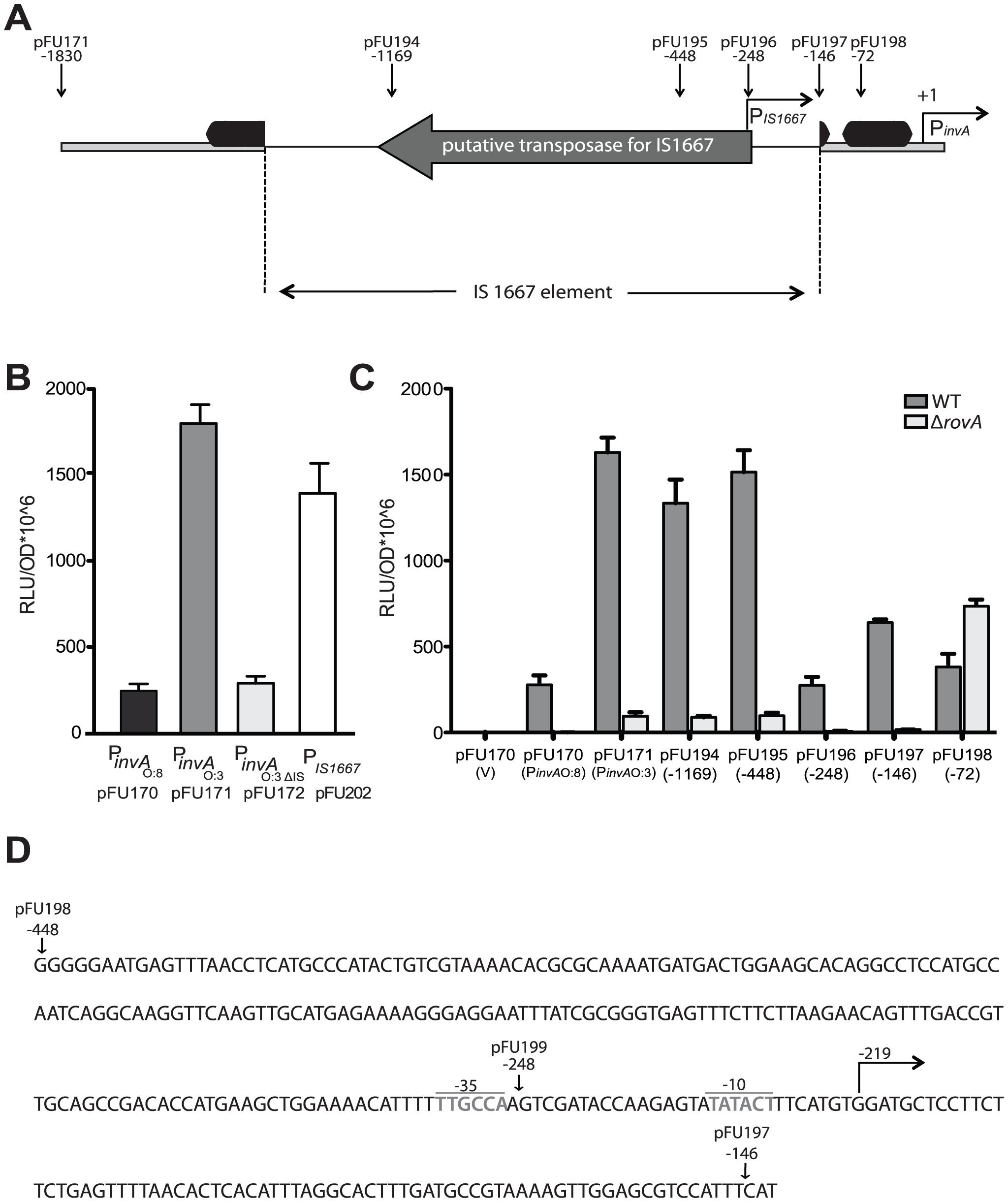 Analysis of <i>invA</i> expression in <i>Y. enterocolitica</i> O:3.