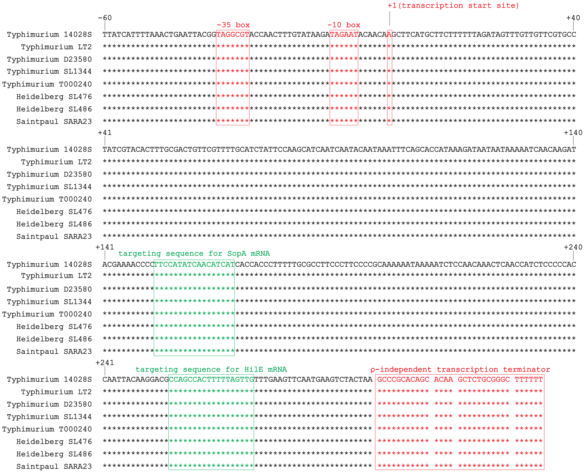 Alignment of <i>isrM</i> sequences of different <i>Salmonella</i> strains including the upstream promoter region, based on BLAST searches of the IsrM sequences in GenBank.