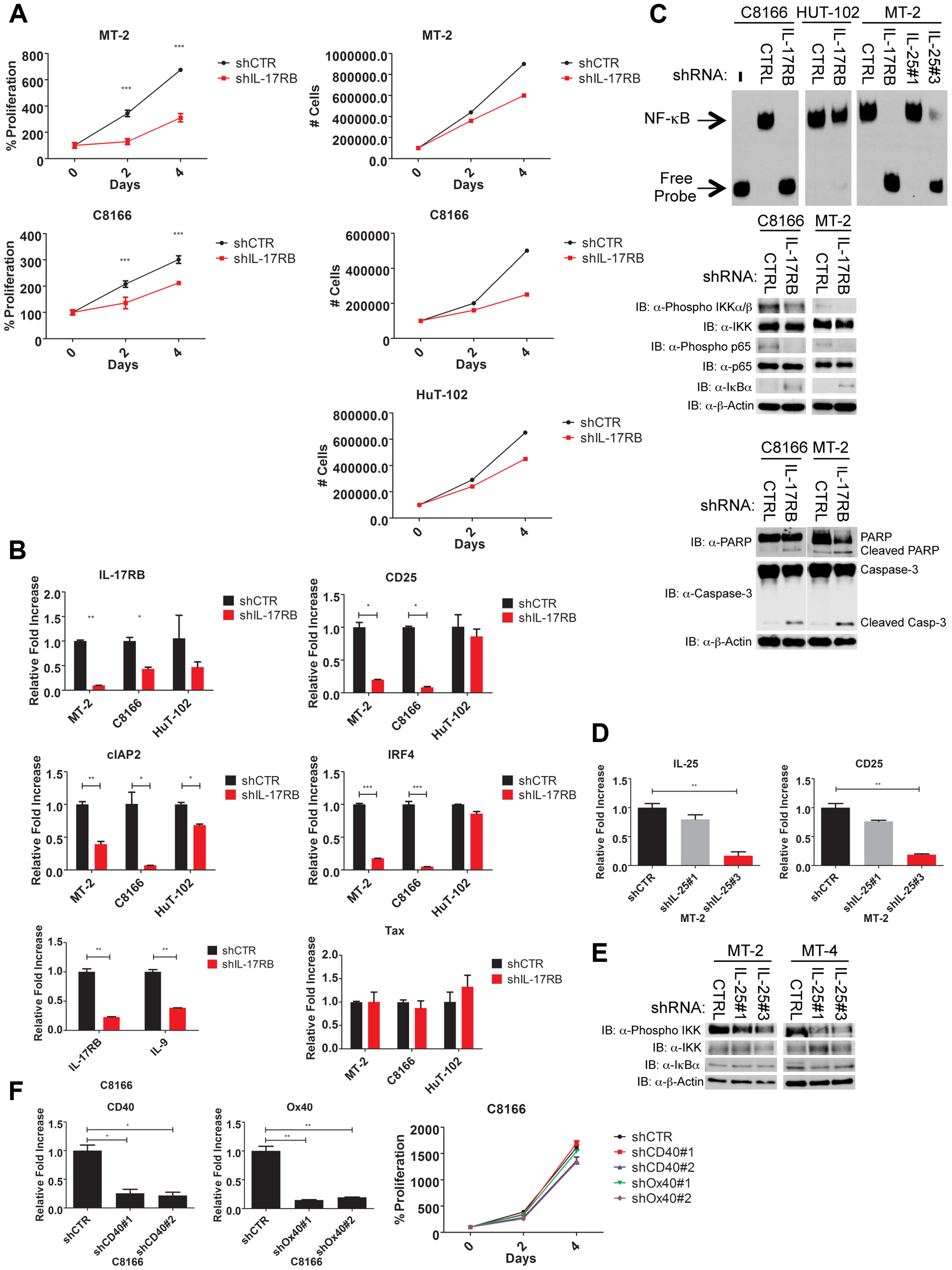 IL-17RB and IL-25 are essential for NF-κB activation and survival of HTLV-1 transformed cells.
