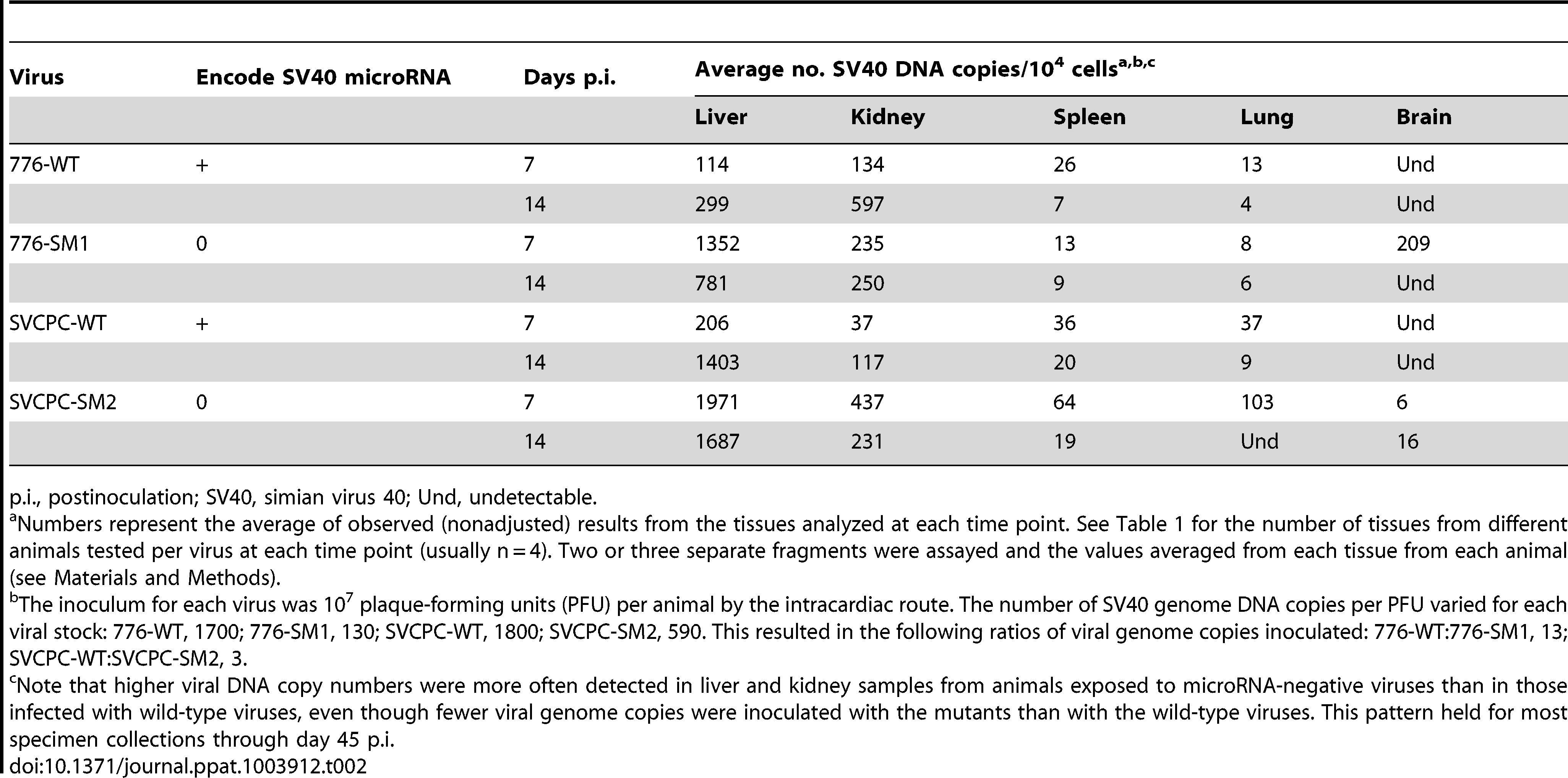 Viral loads in different hamster tissues during early stages of infection by SV40.