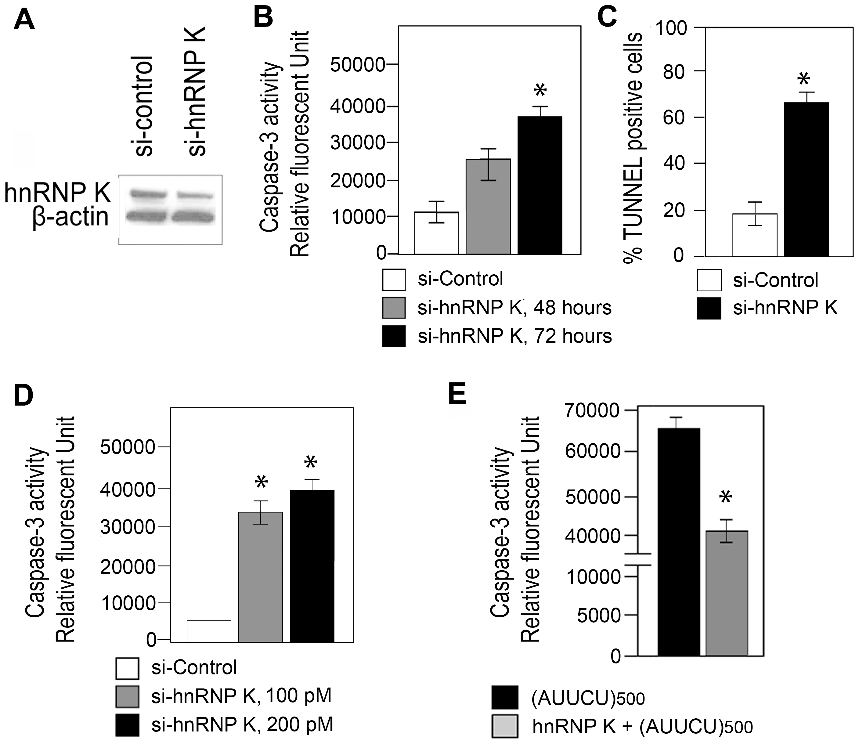 Targeted inactivation of <i>hnRNP K</i> triggers apoptosis whereas ectopic expression of hnRNP K rescues AUUCU–mediated apoptosis.