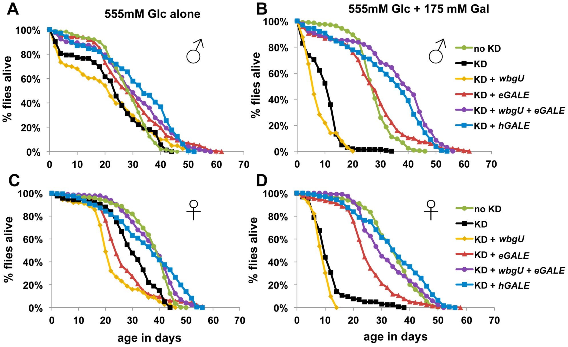 Flies lacking GALE activity toward UDP-gal/UDP-glc have a shortened life span when exposed to galactose as adults.