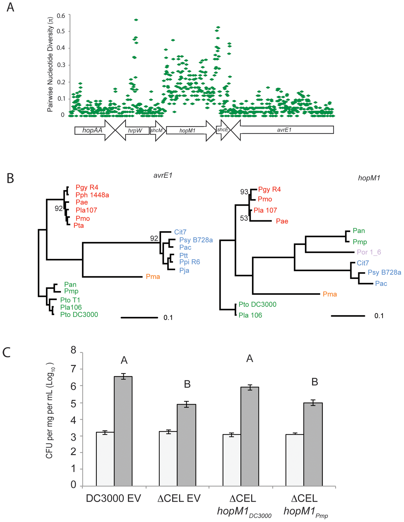 Recombination of <i>hopM1</i> in group I strains leads to functional divergence.