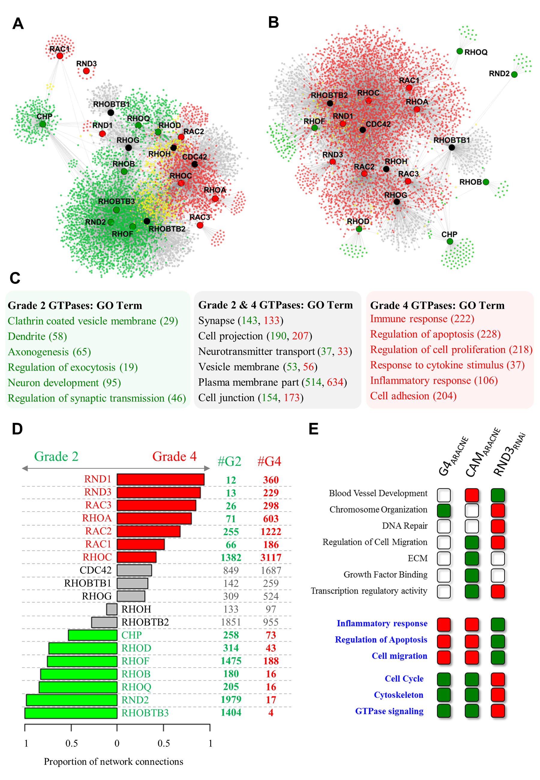 Transcriptional networks reveal two groups of Rho GTPases with divergent connectivity in grade II and grade IV glioma.