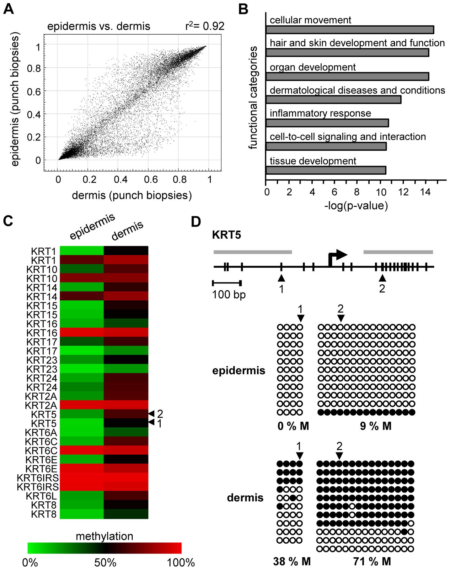 Distinct DNA methylation patterns of human epidermis and dermis.