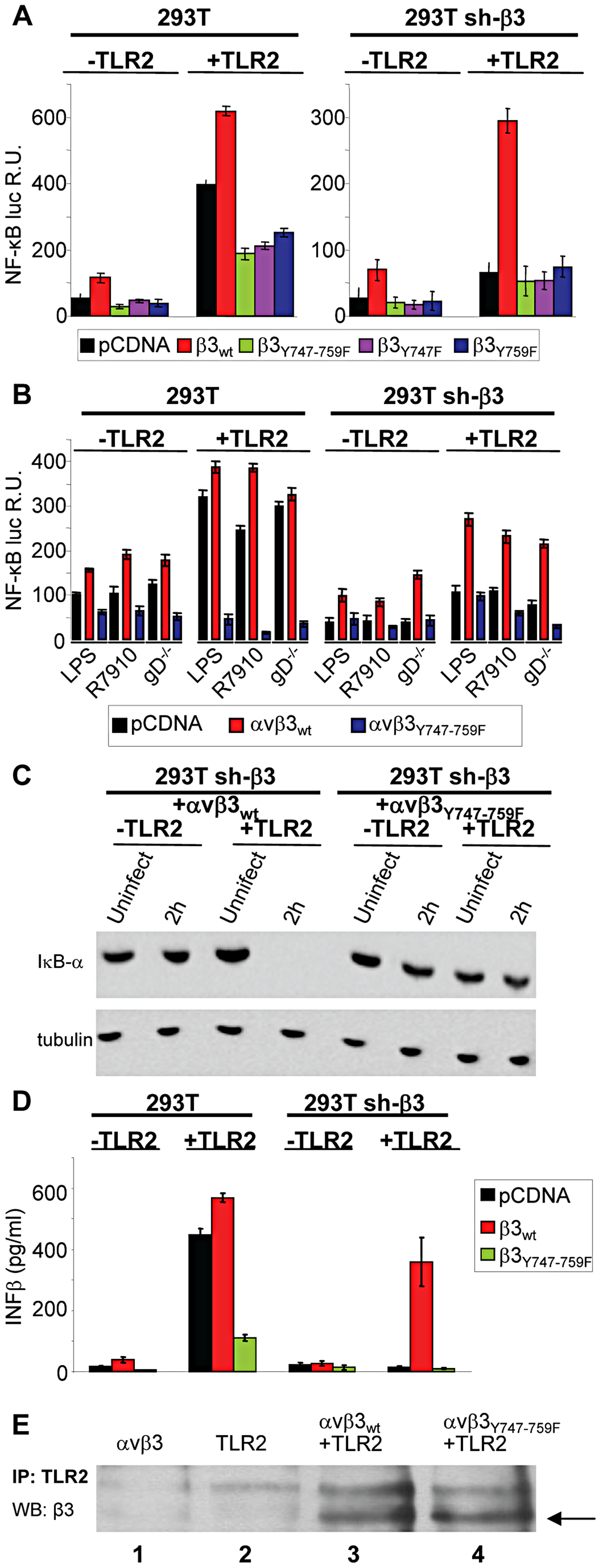 The NF-κB activation induced by HSV or LPS involves signaling through the cytoplasmic tail of β3-integrin.