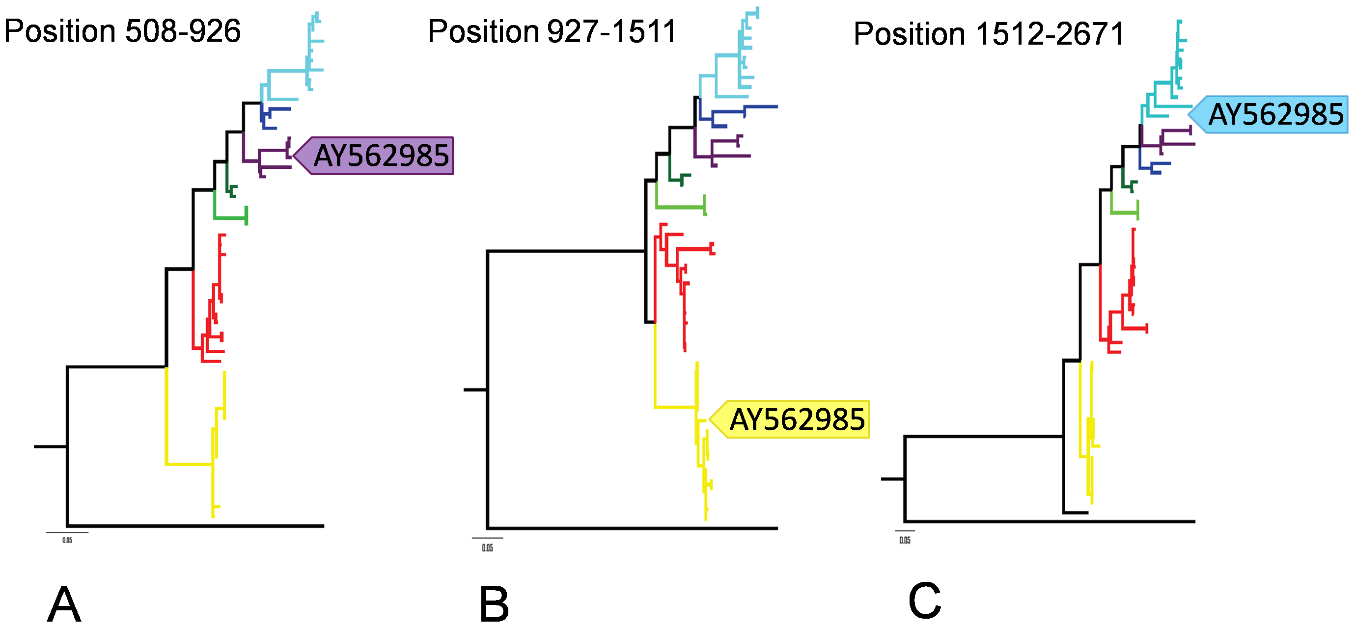 ML trees on the three putative recombinant regions identified in AY562985.