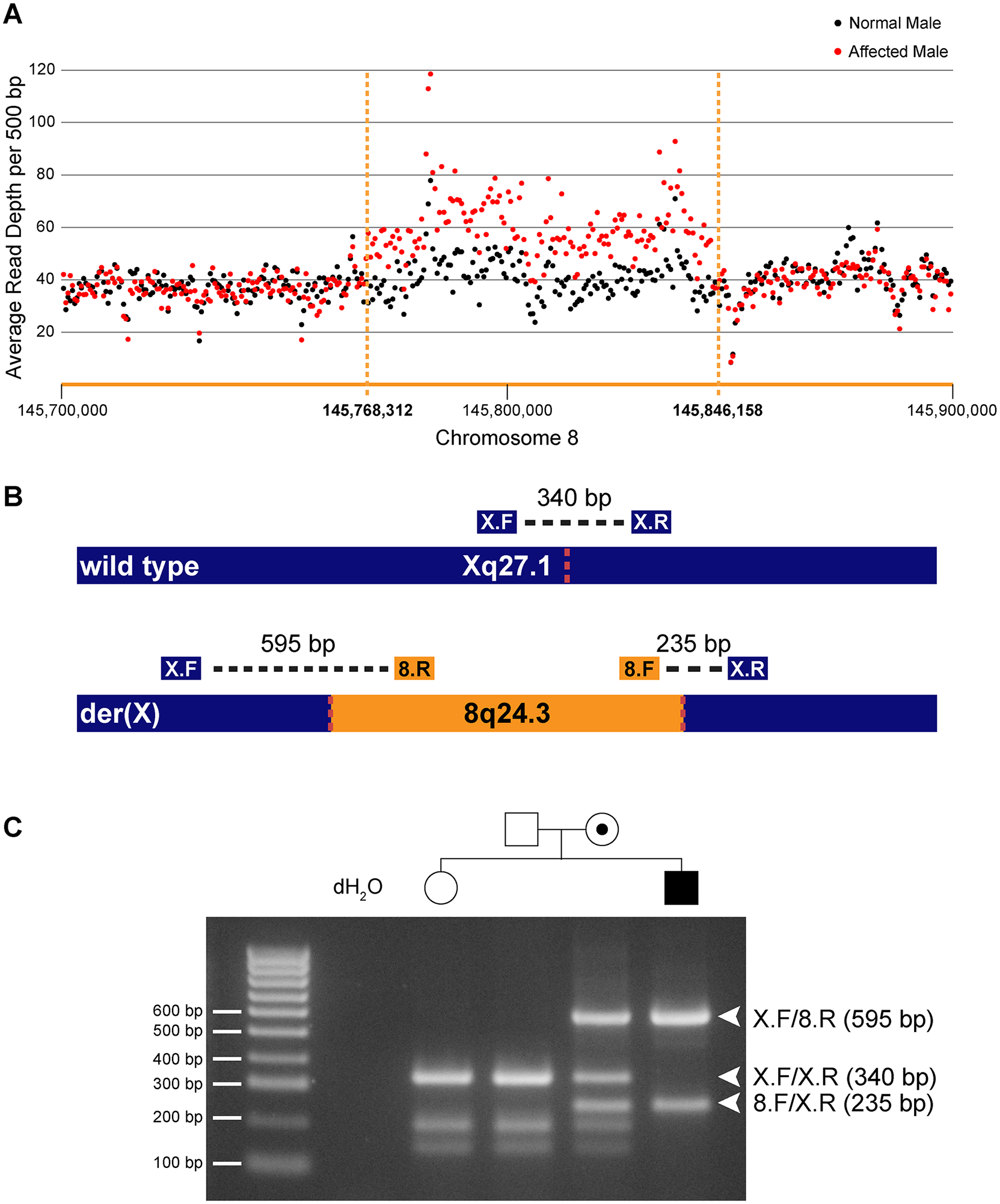 Identification and confirmation of a 78 kb chromosome 8q24.3 insertion in patients with CMTX3.