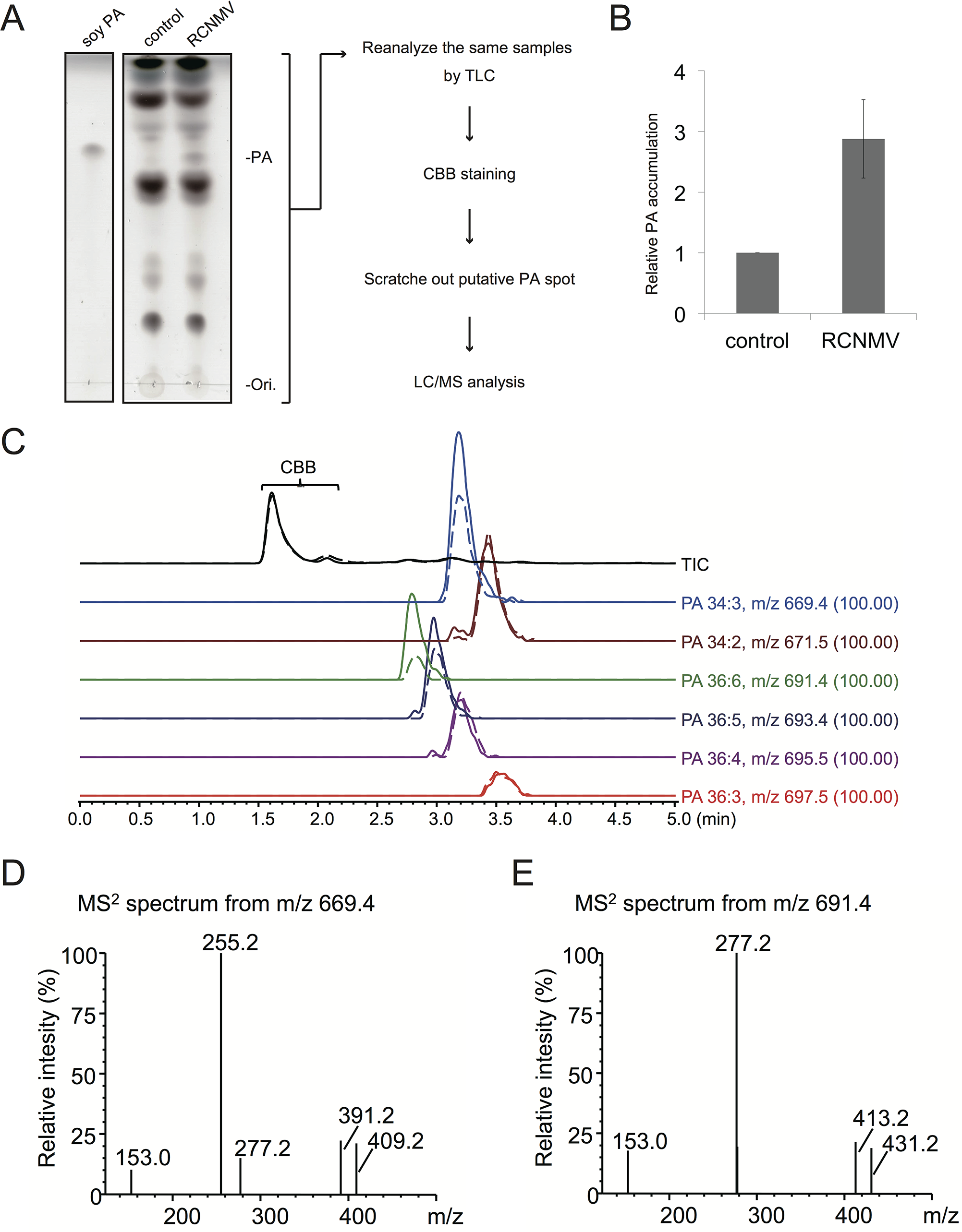 RCNMV stimulates the accumulation of PA in a plant tissue.