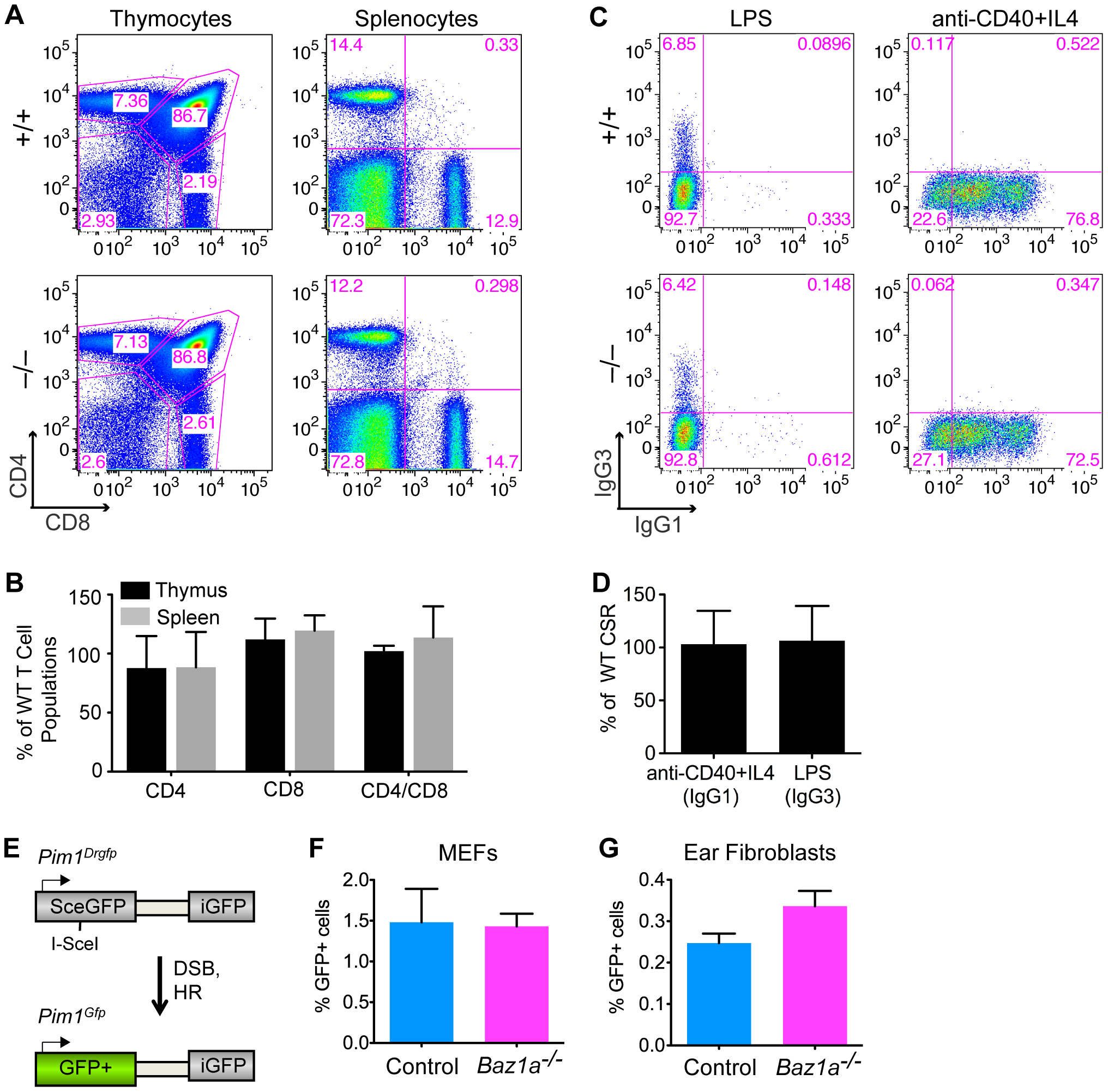 Repair of endogenously and exogenously induced DSBs in BAZ1A-deficient somatic cells.