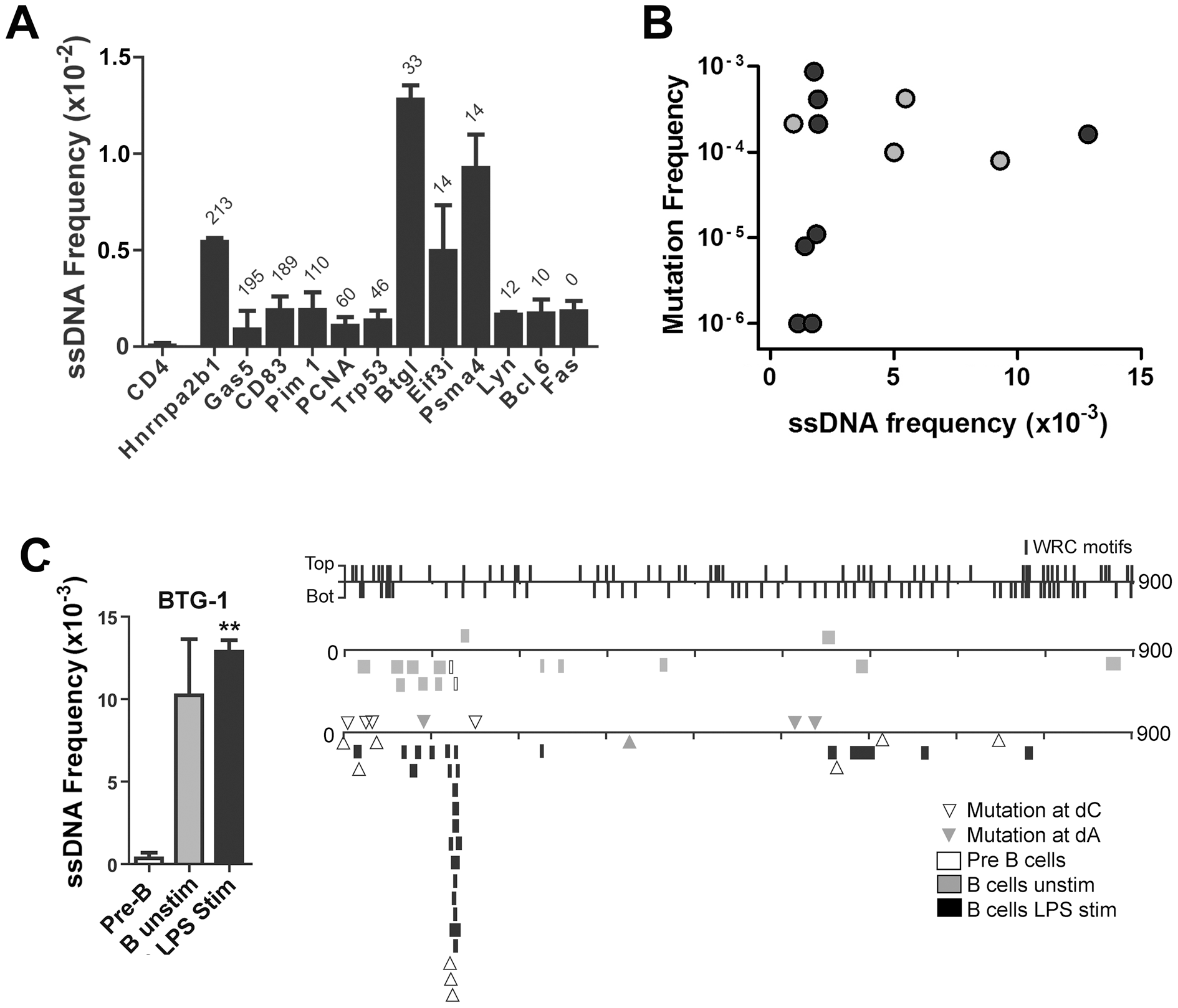 ssDNA Frequencies at Non-Ig Sequences in LPS-Stimulated <i>Ex Vivo</i> Murine B Cells.