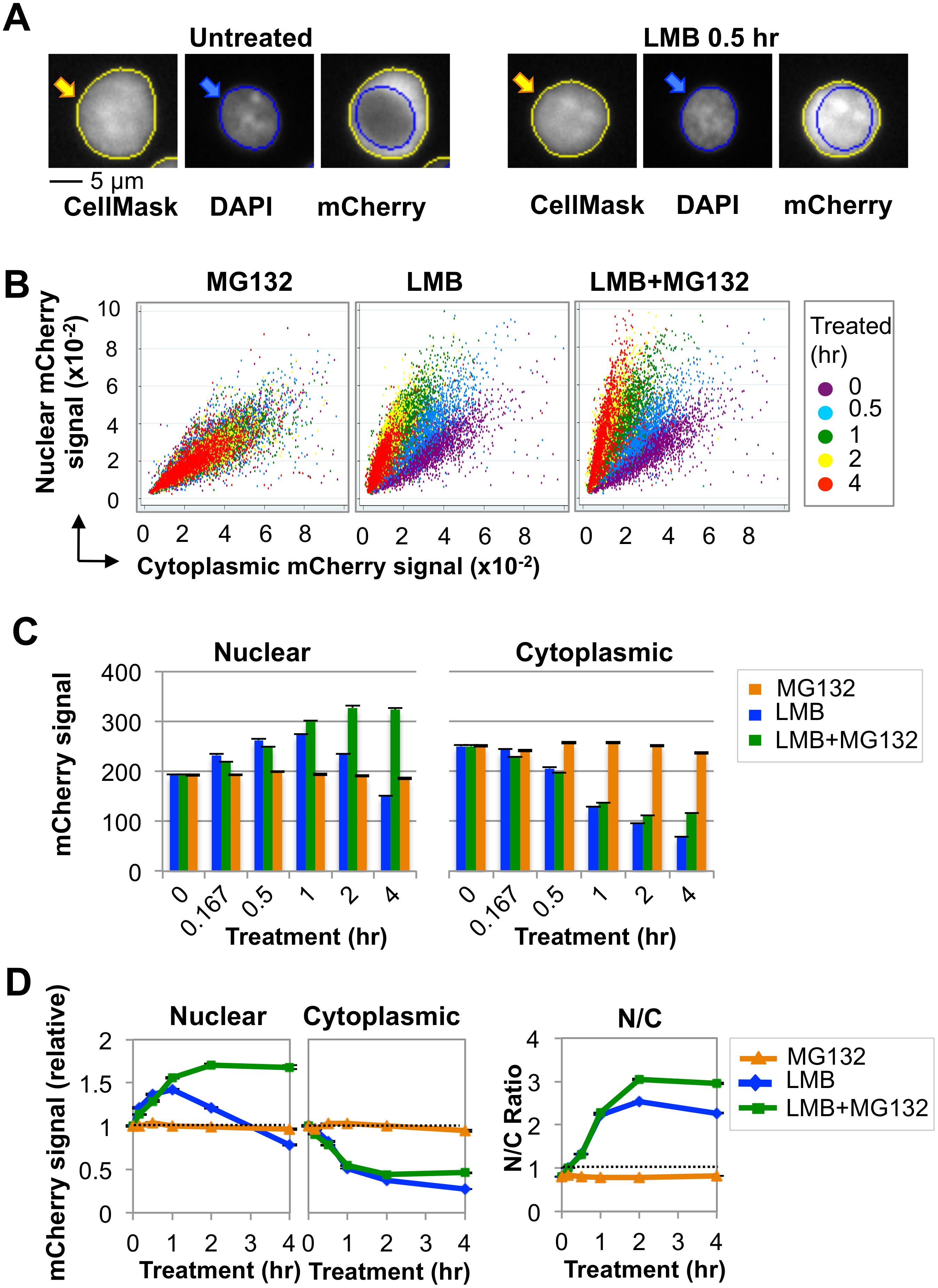 Nuclear AID is destabilized by ubiquitin-dependent proteolysis.