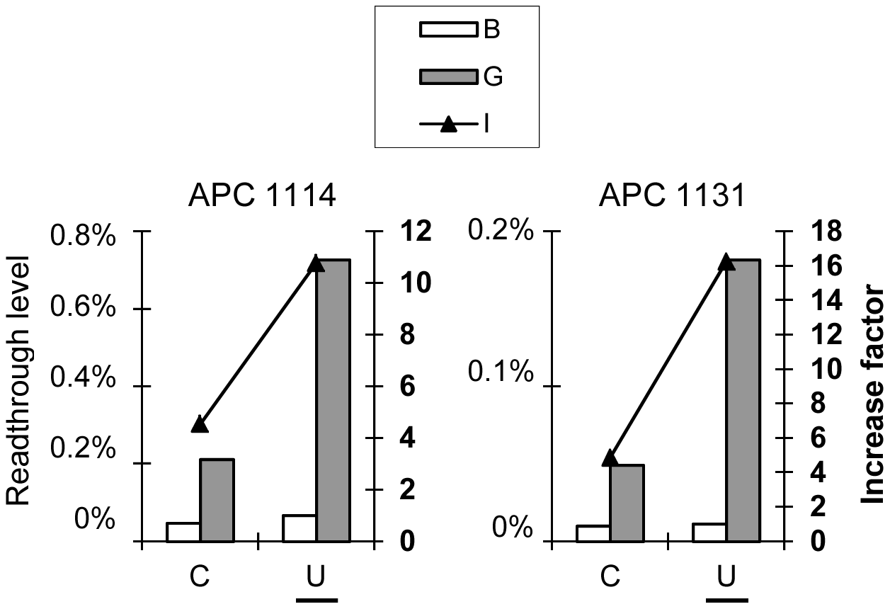 The nature of the tRNA at the P site is not the major determinant of the gentamicin response.