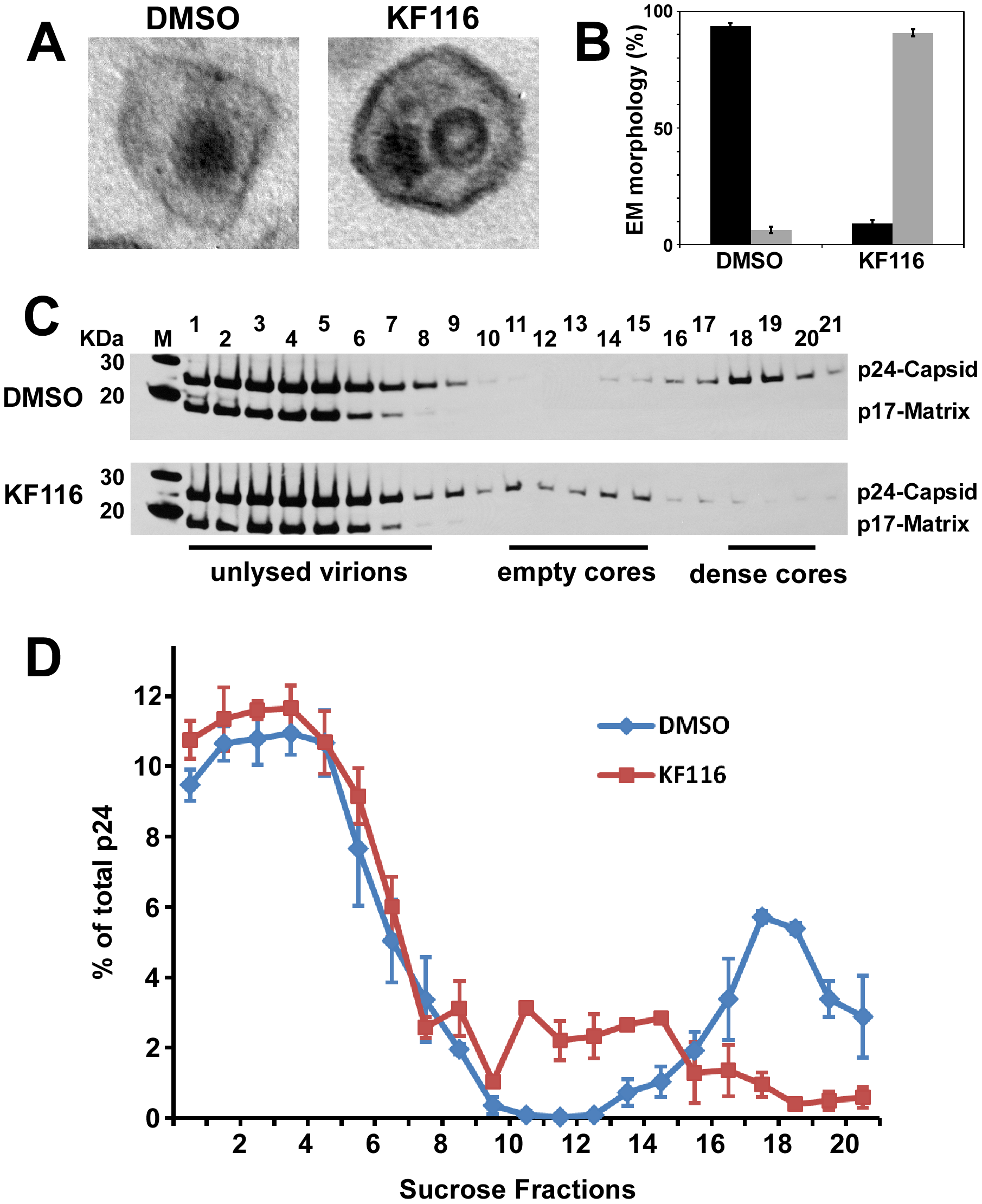 KF116 impairs formation of dense cores in HIV-1 virions.