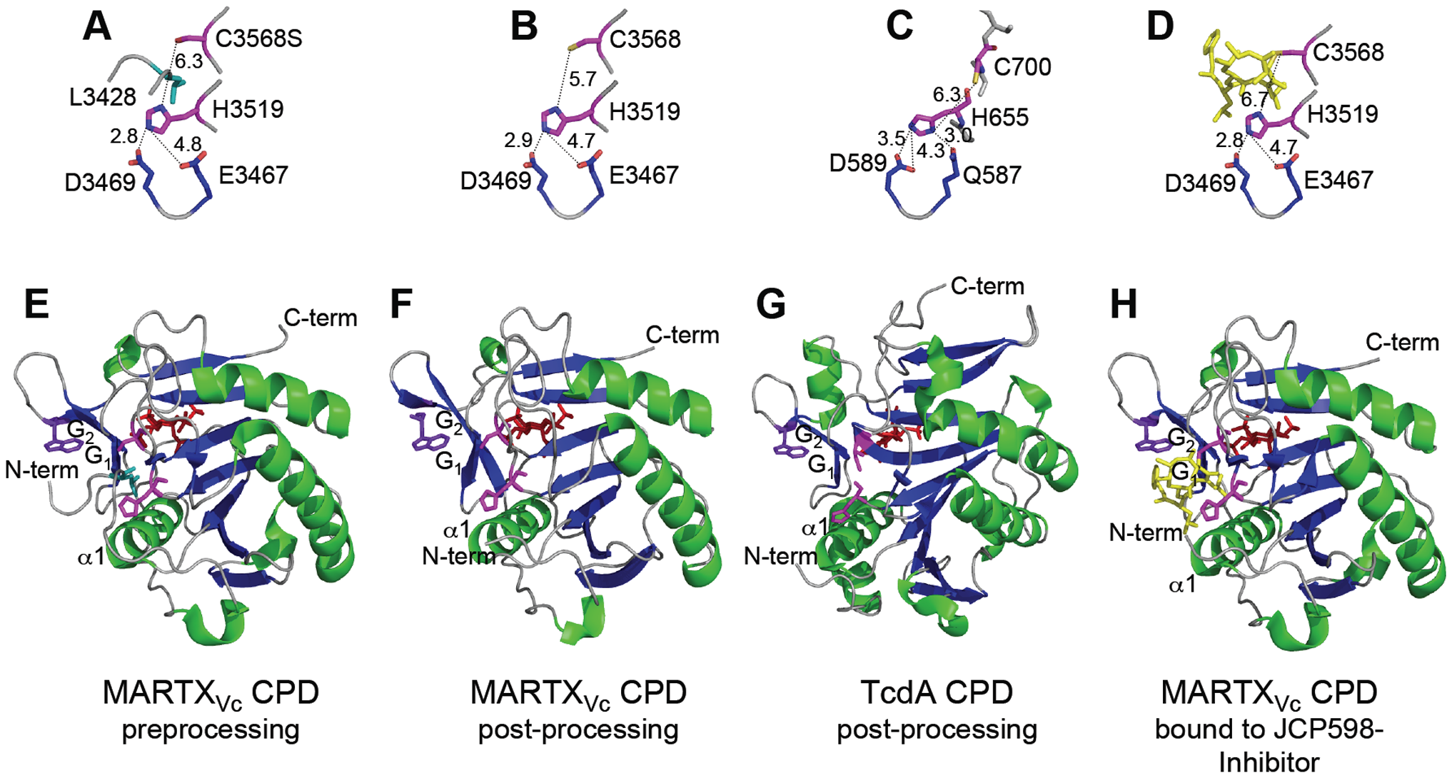 Crystal structures of MARTX<sub>Vc</sub> and TcdA CPDs.