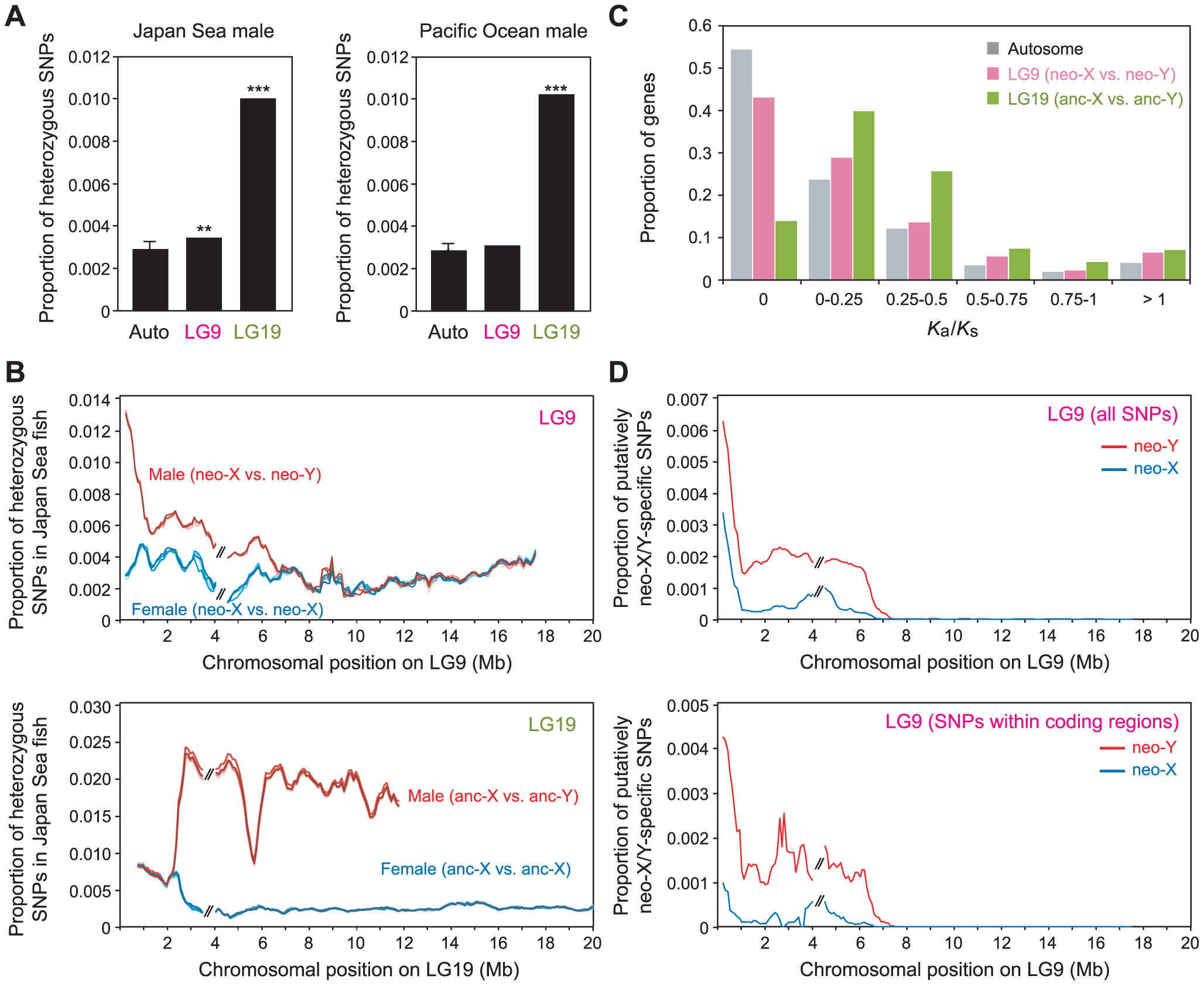 Nucleotide divergence between the Japan Sea neo-X and the neo-Y chromosomes.