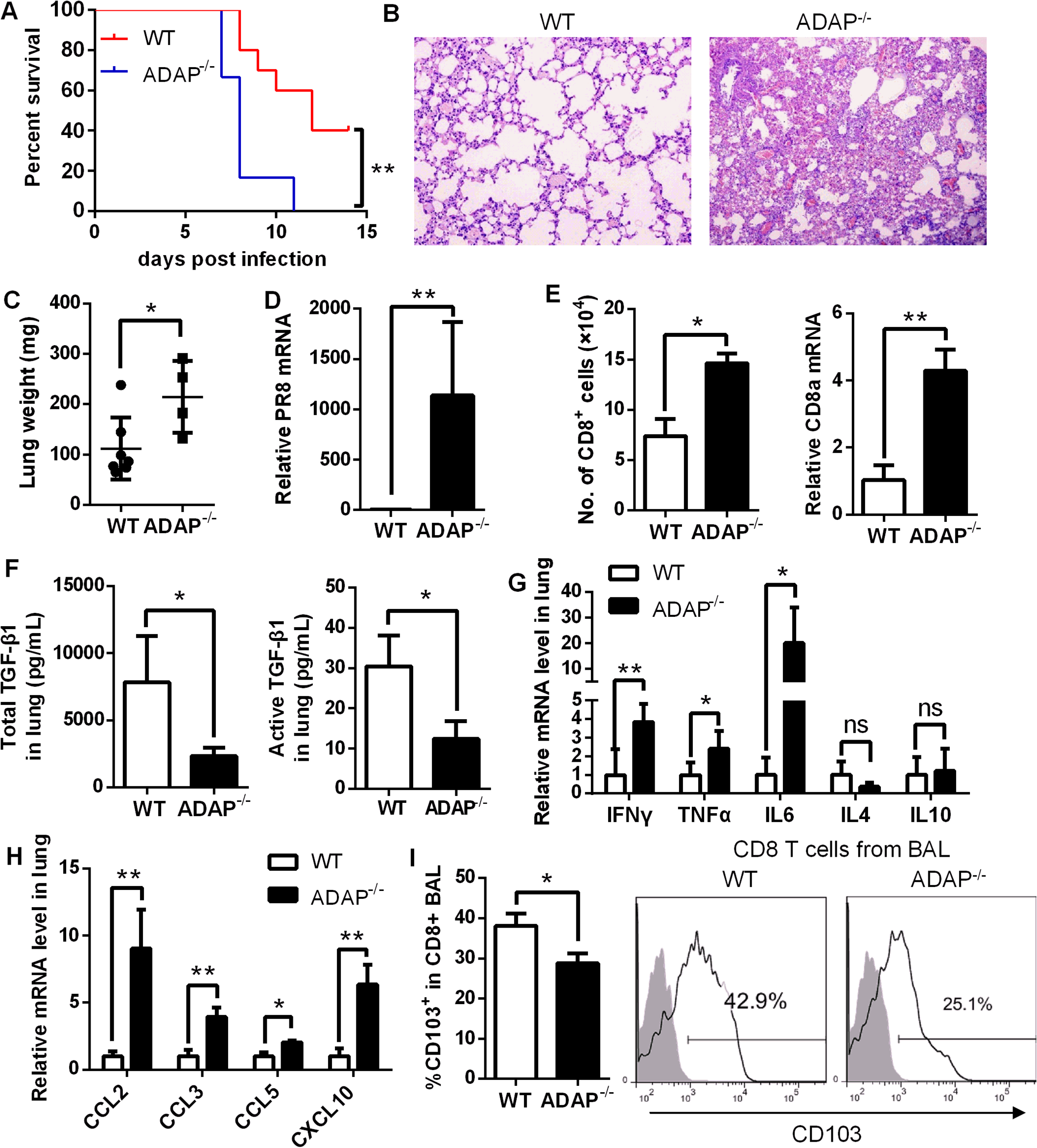 ADAP<sup>-/-</sup> mice enhanced mortality with defective expression of TGF-β1 and CD103 in response to H1N1 infection.