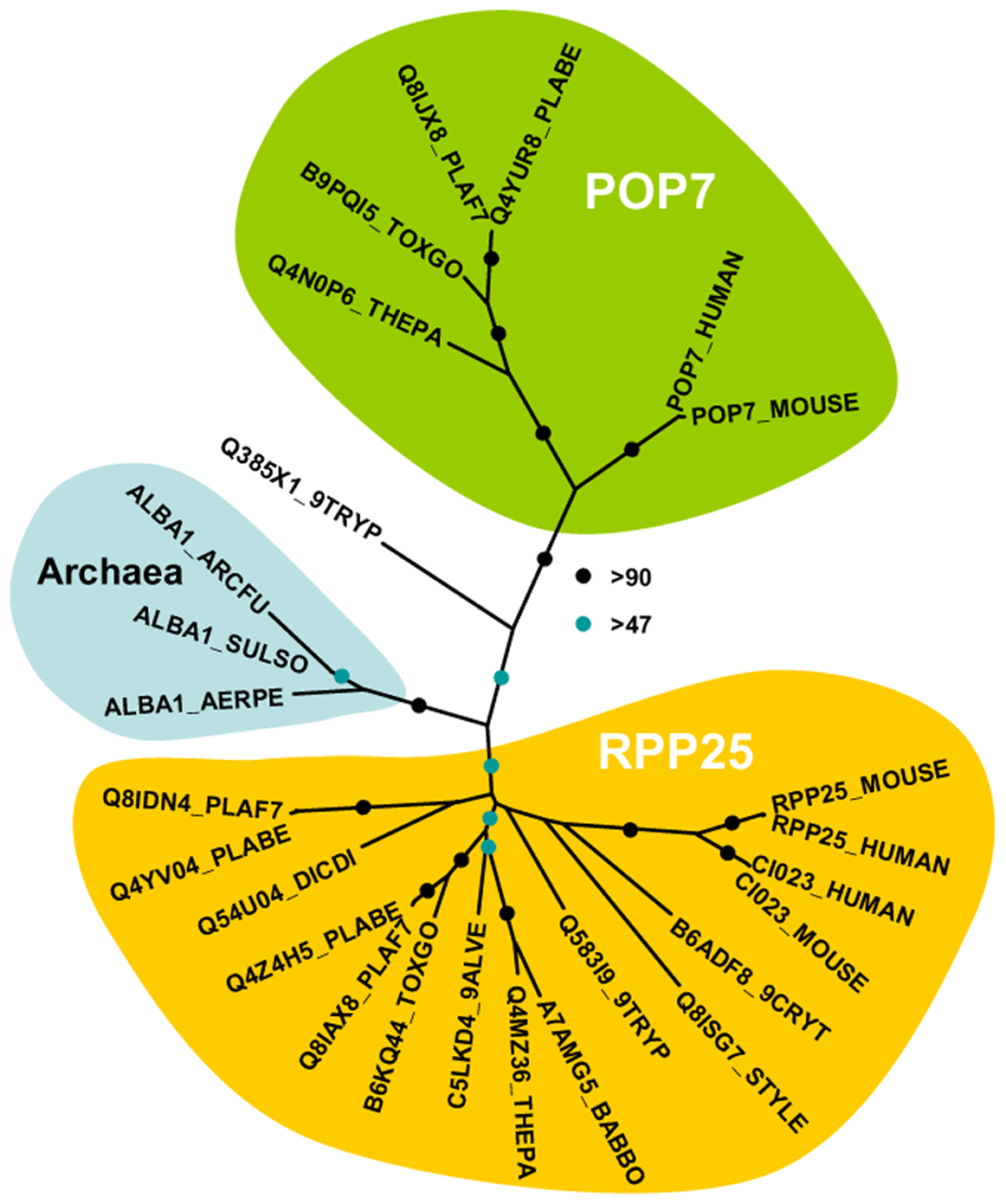 Phylogenetic position of <i>Plasmodium</i> Alba-domain proteins.