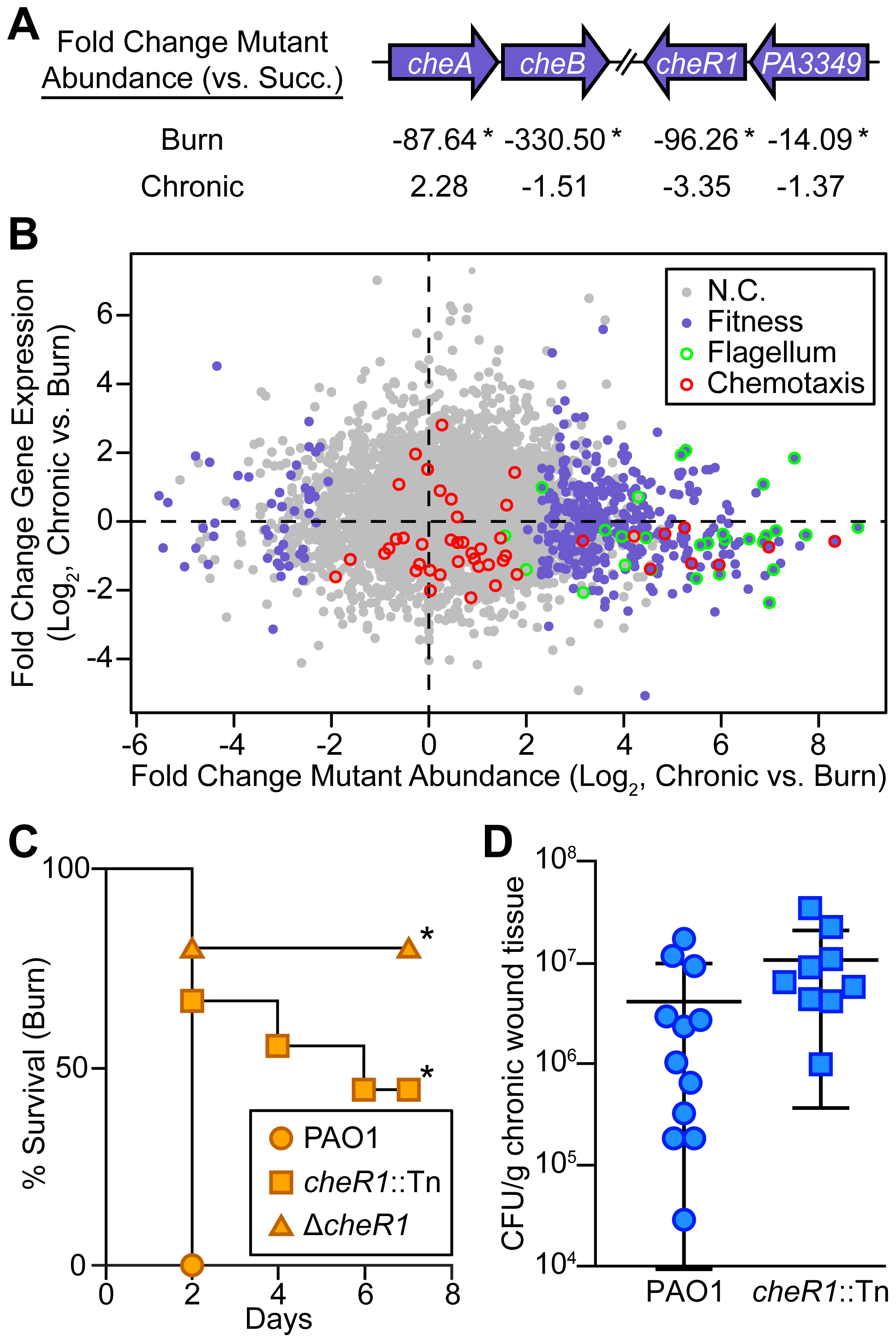 Chemotactic flagellar motility is required in burn wounds and not chronic wounds.