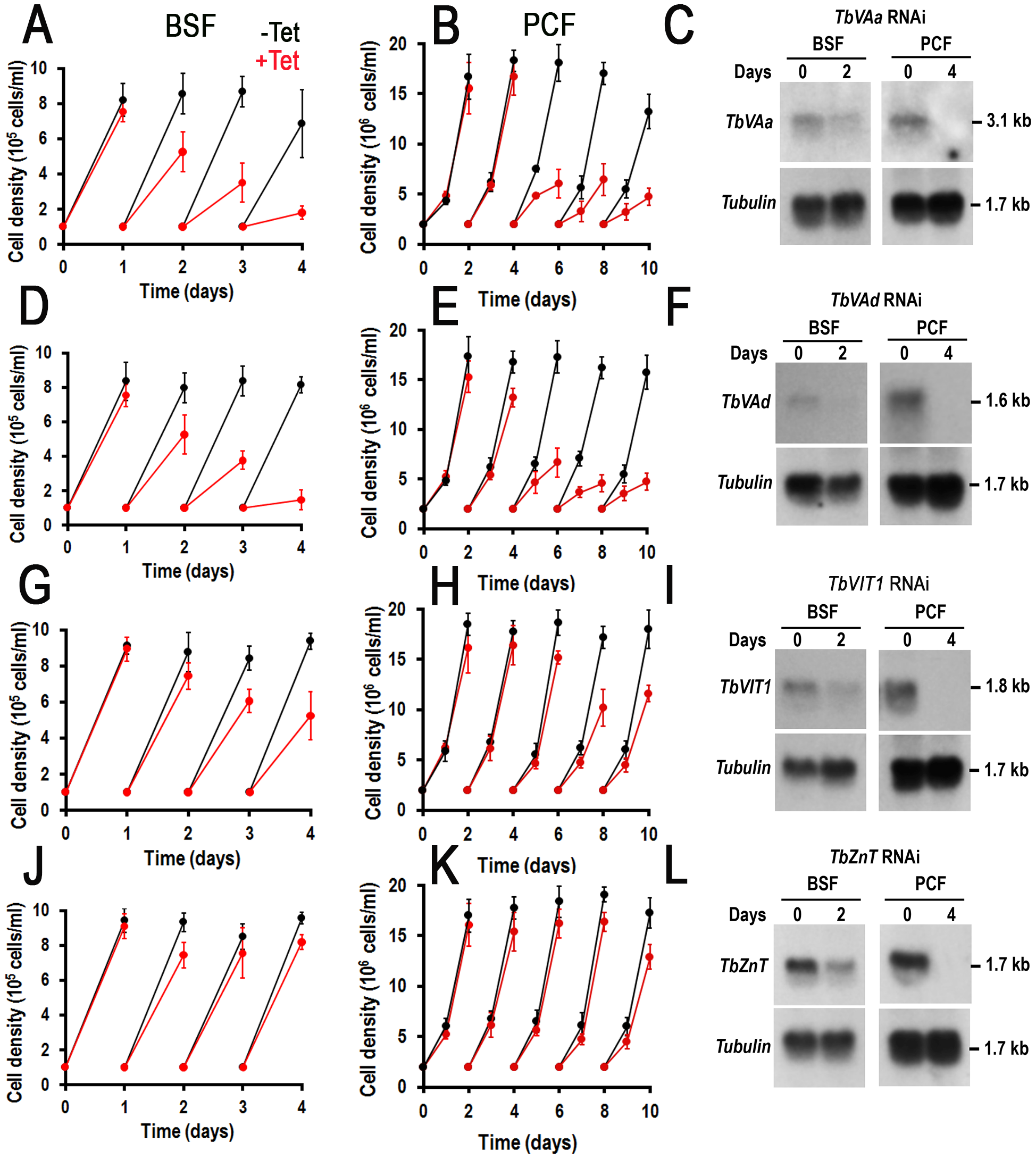Effect of inhibition of expression of four acidocalcisome genes by tetracycline-induced RNAi on cell growth.