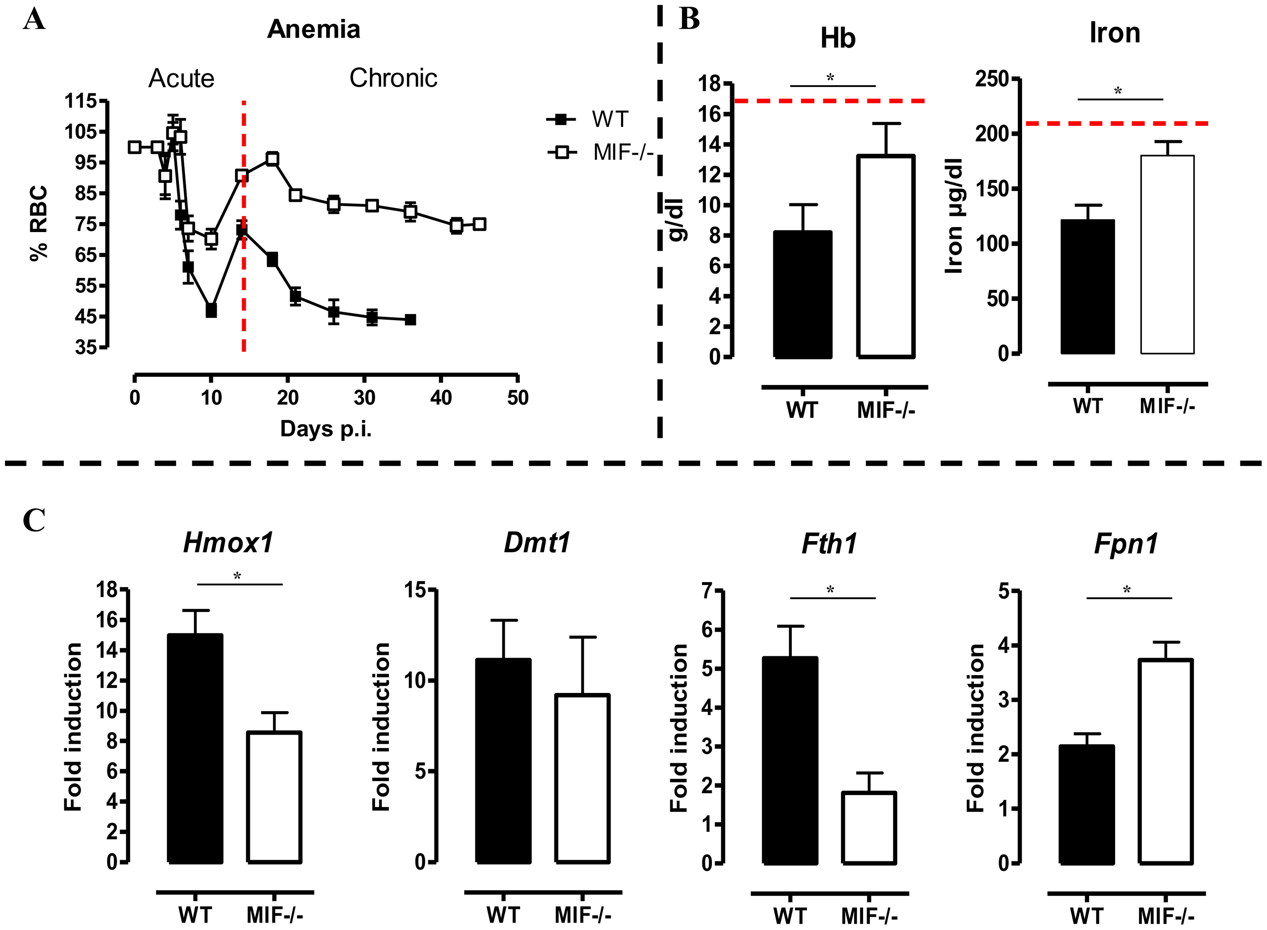 MIF deficiency correlates with reduced anemia, restored hemoglobin/serum iron levels and restored iron homeostasis during <i>T. brucei</i> infection.