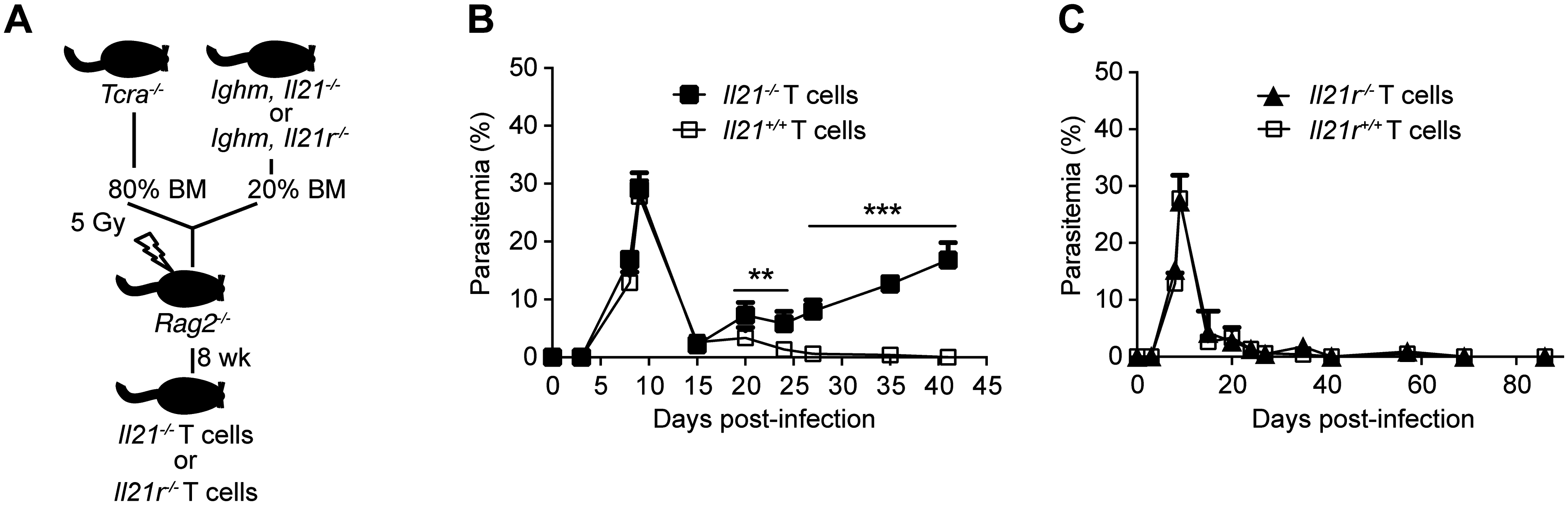 Mice bearing T cells deficient in IL-21 fail to control chronic <i>P</i>. <i>chabaudi</i> infection.