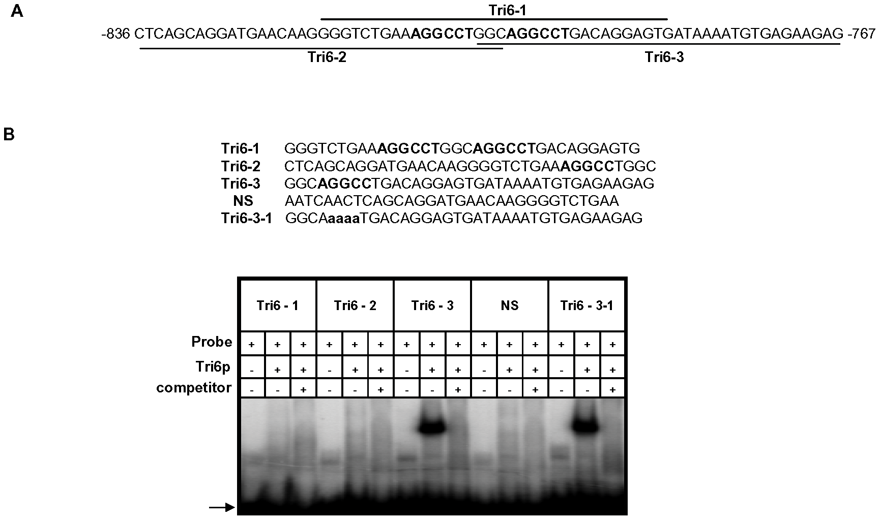 The Tri6 protein does not recognize the YNAGGCC motif by EMSA analyses.