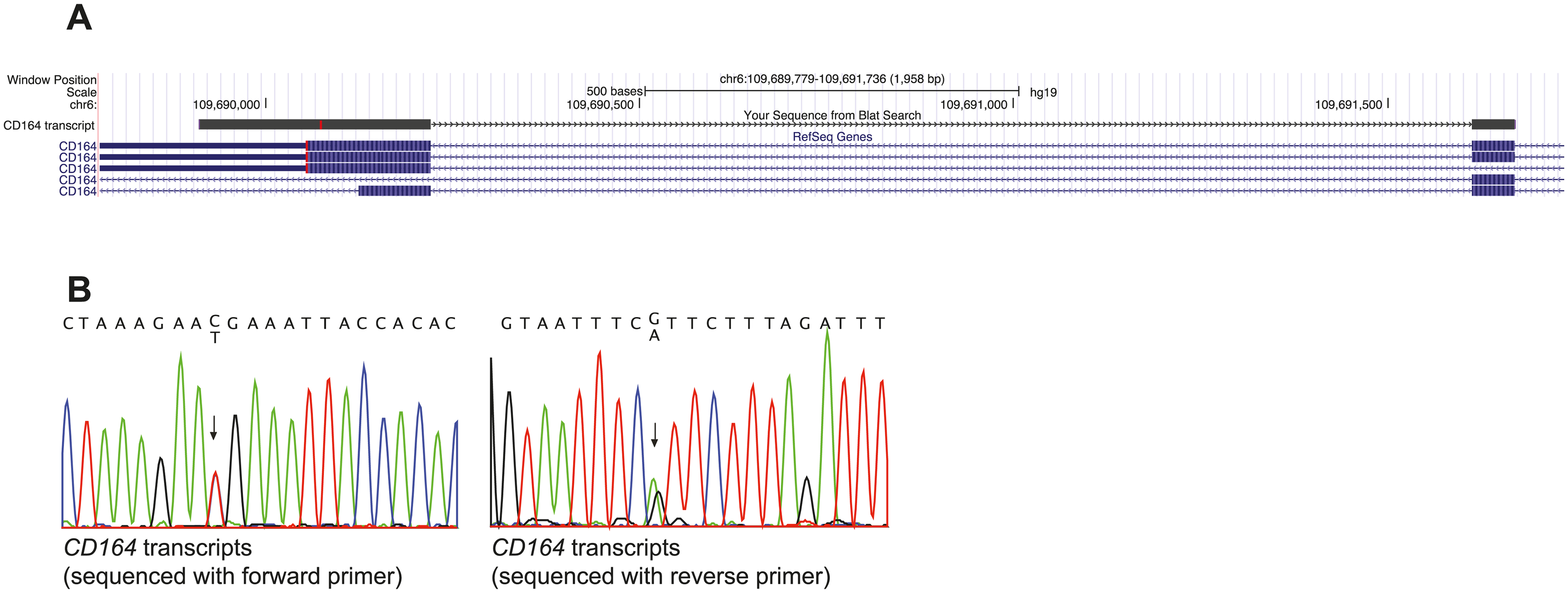 <i>CD164</i> transcripts with the c.574C>T (p.R192*) nonsense mutation escape NMD.