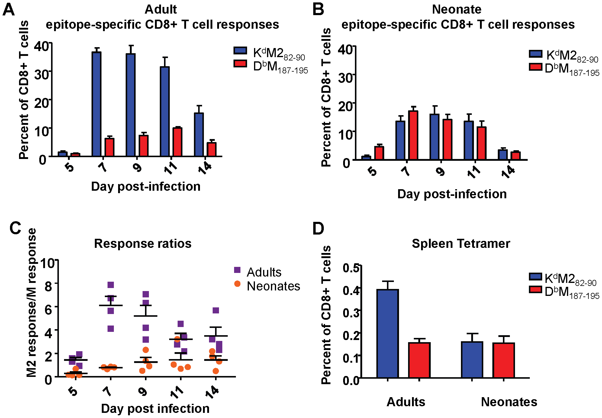RSV epitope-specific CD8+ T cell responses during acute infection and memory.
