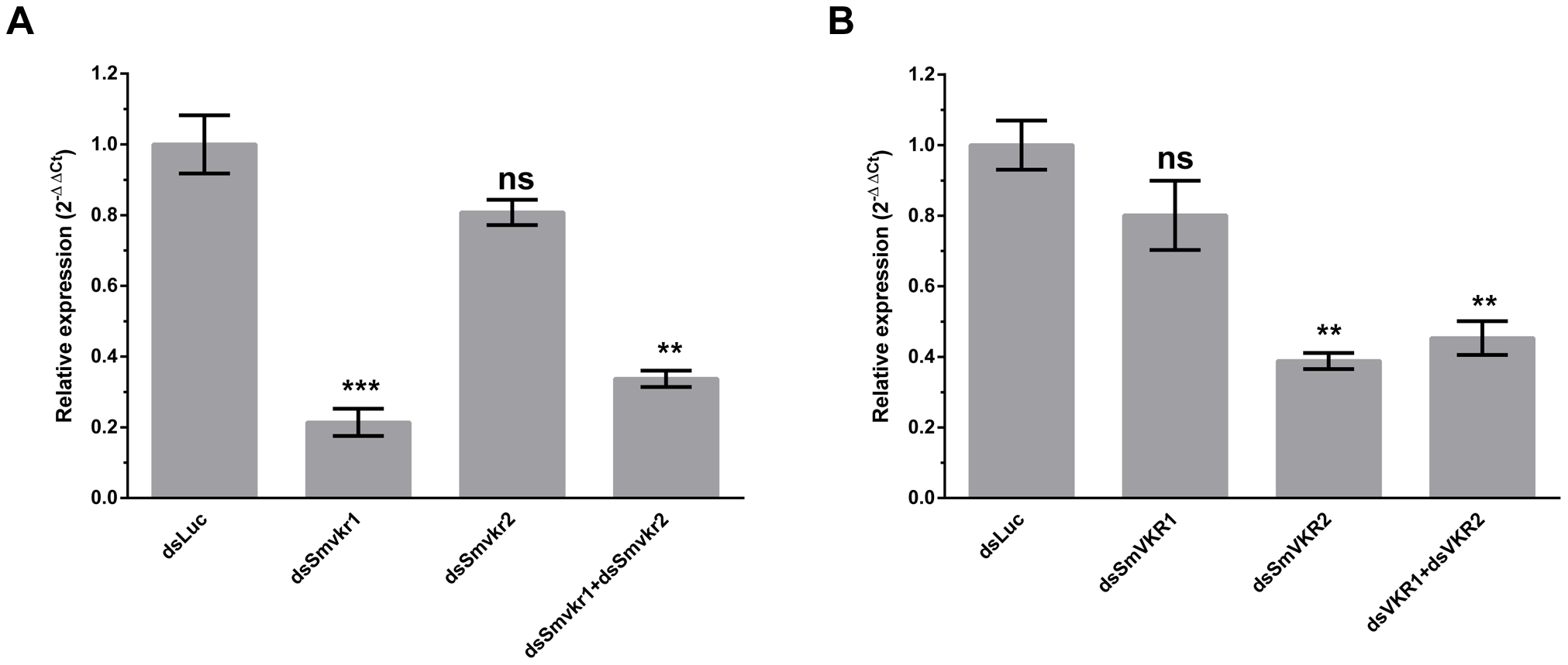 Efficiency of SmVKR1 and SmVKR2 knock-down by RNA interference in adult worm pairs.