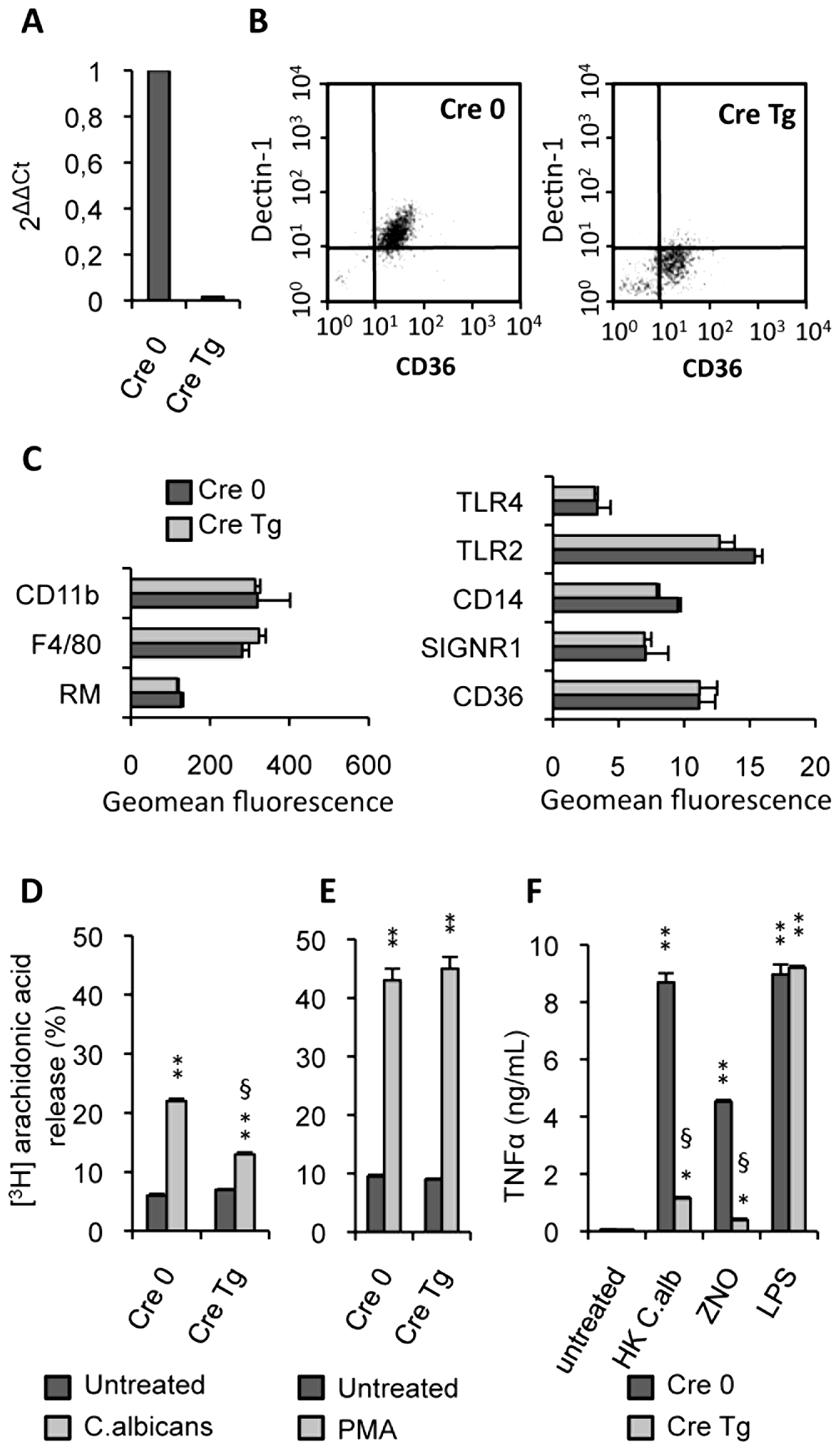Characterization of Dectin-1 conditional knock-out macrophages.
