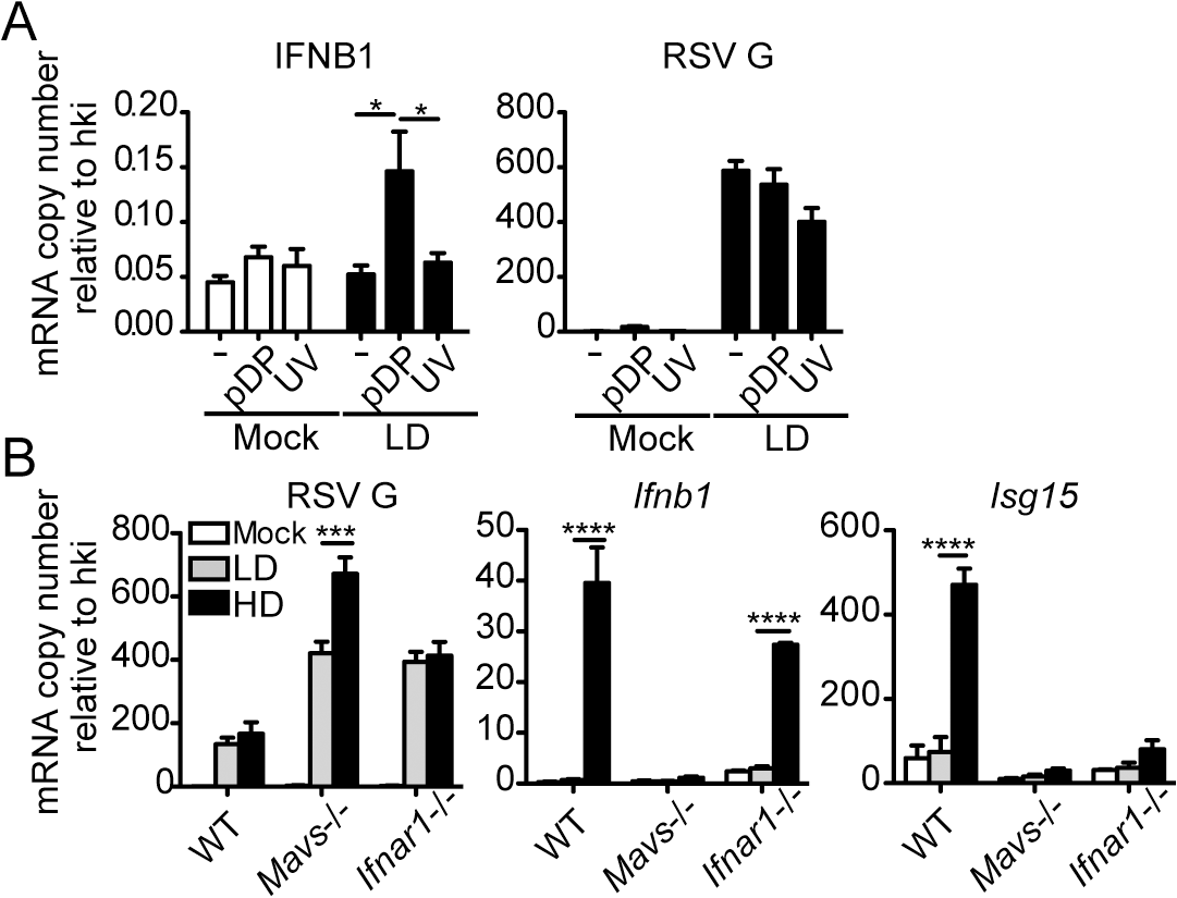 RSV iDVGs promote a MAVS-mediated antiviral response during RSV infection.