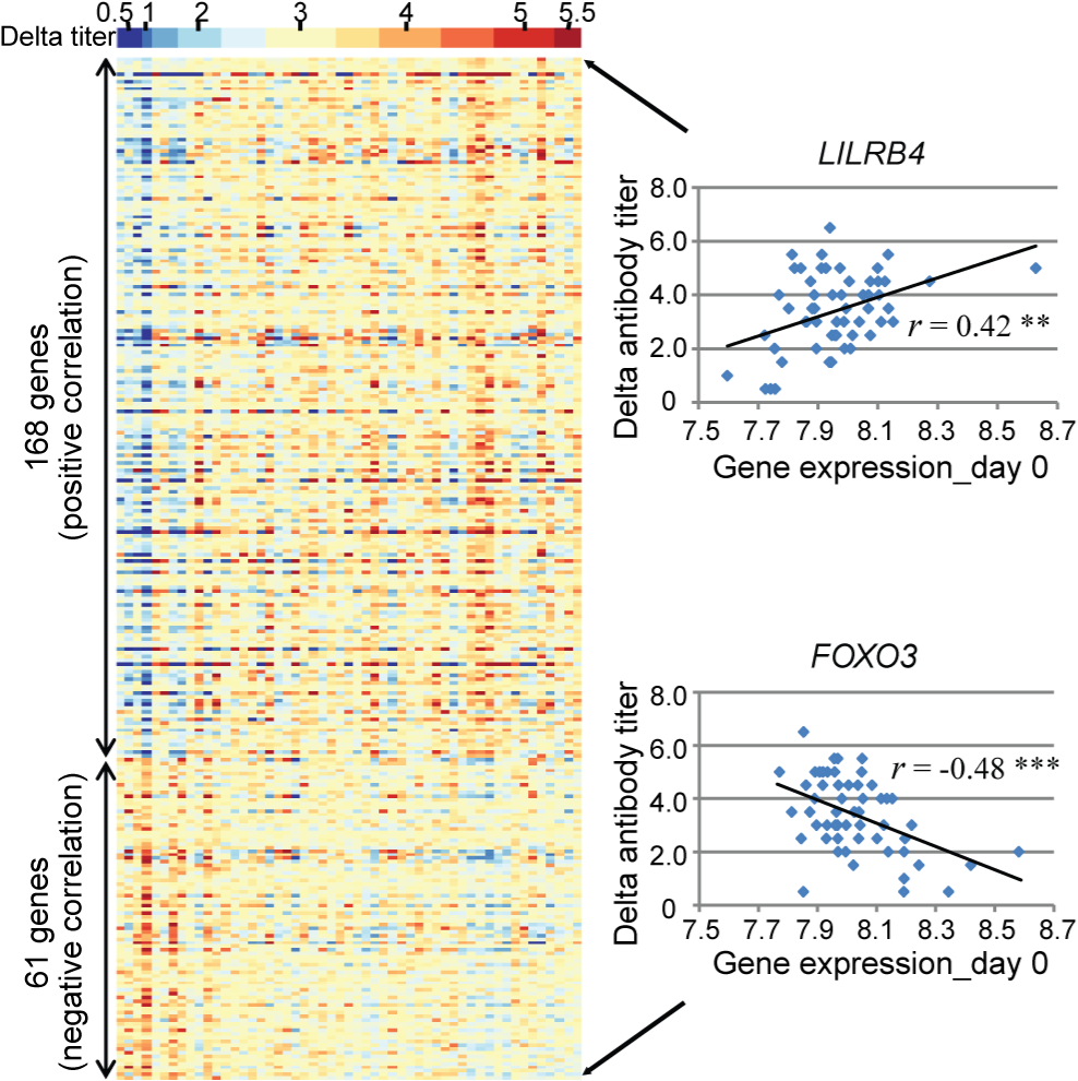 A total of 229 genes showed evidence of significant correlation between gene expression and the antibody response.
