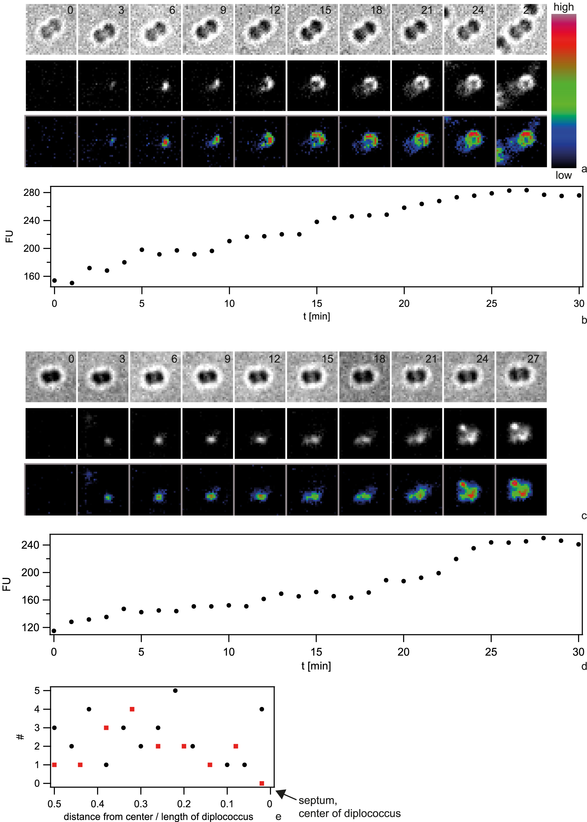 Dynamics of focus formation (<i>ΔpilV</i>) with 10 kbp fragments of Cy3-DNA.