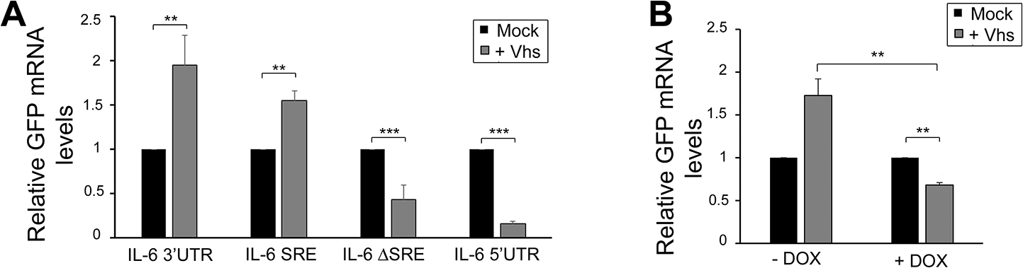 SRE-mediated protection mechanism expands beyond SOX induced decay.